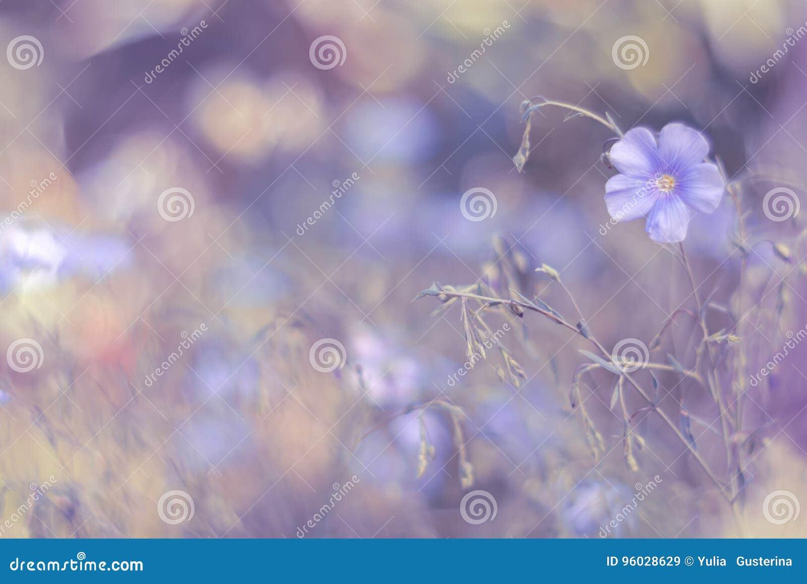 Delikatni kwiaty bieliźniani na lilym tle Artystyczny wizerunek Miękka część, selekcyjna ostrość