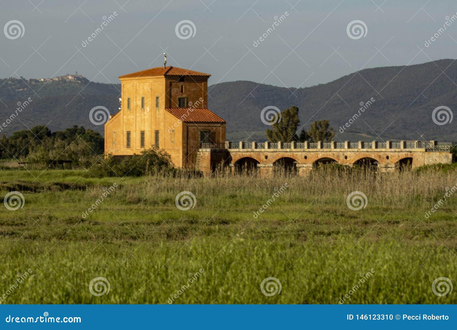 Della Pescaia Grosseto, natürliche Reserve Italiens Toskana Maremma Castiglione von Diaccia Botrona, im Hintergrund über dem Hüge