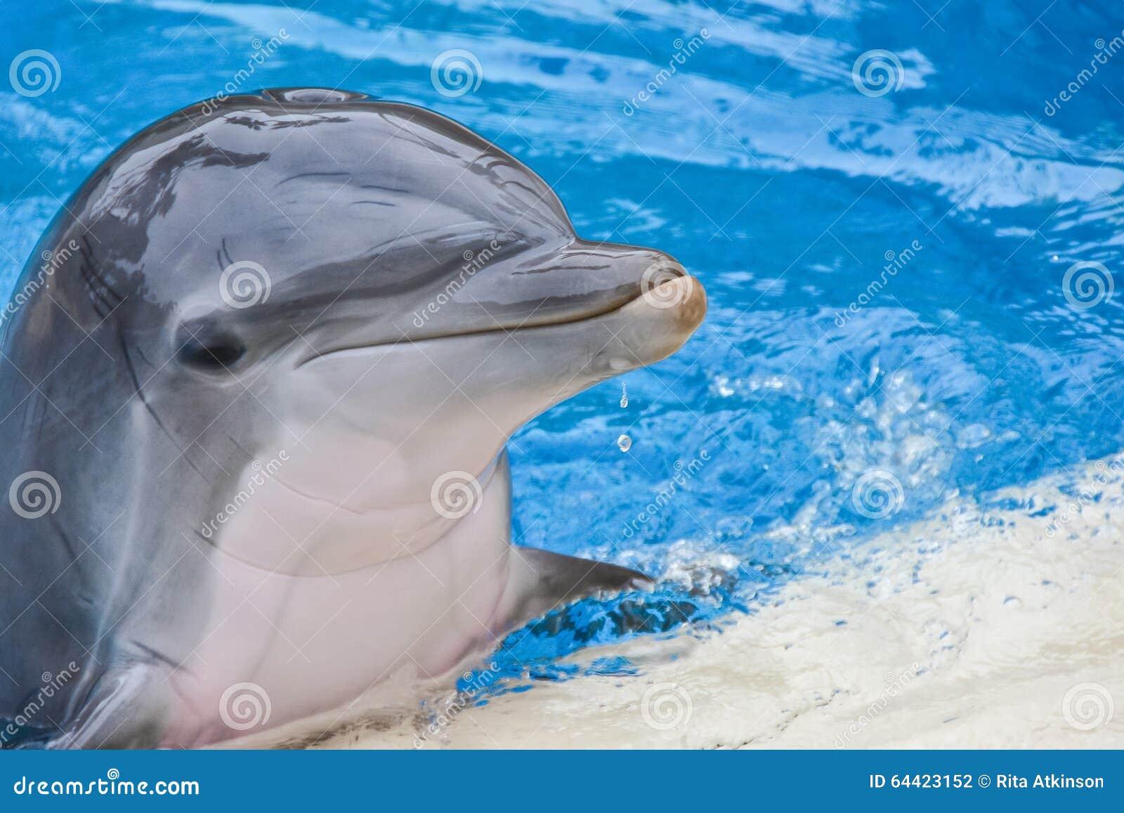 Delphin, der im Poolporträt lächelt