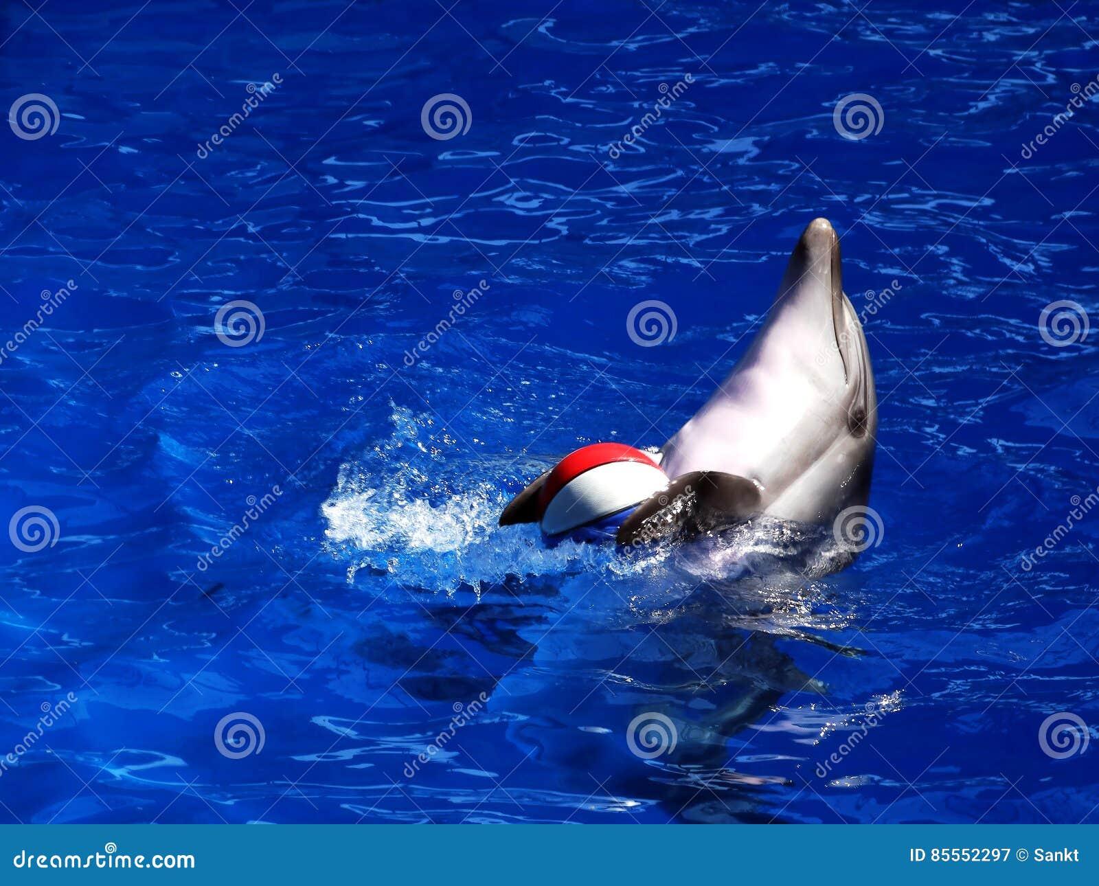 Delphin mit Ball