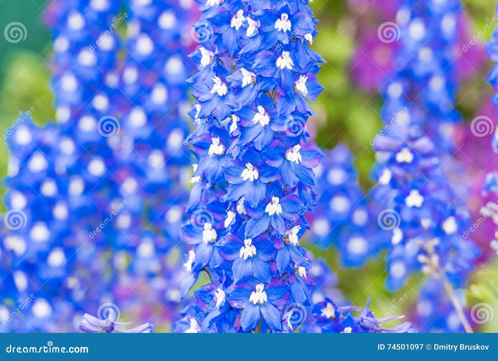 Delphinium Flower In The Garden Stock Image Image Of Ornamental