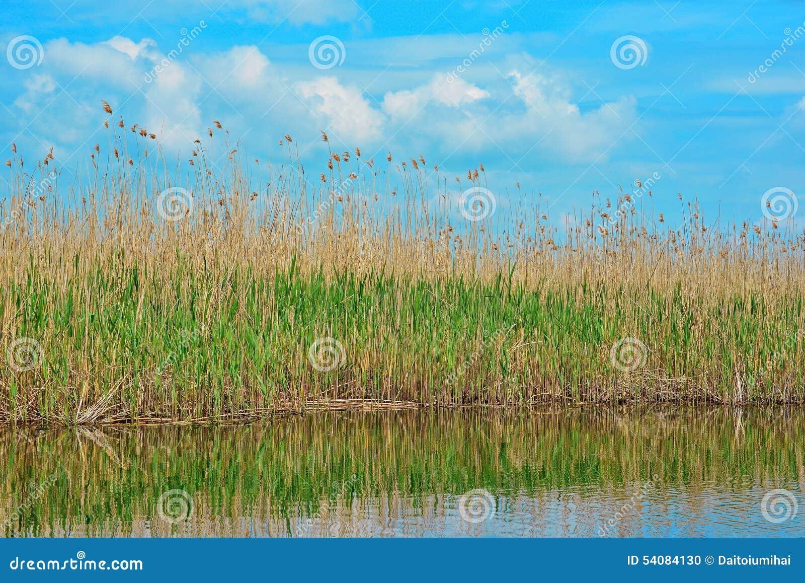 Delta het rietmening van Donau