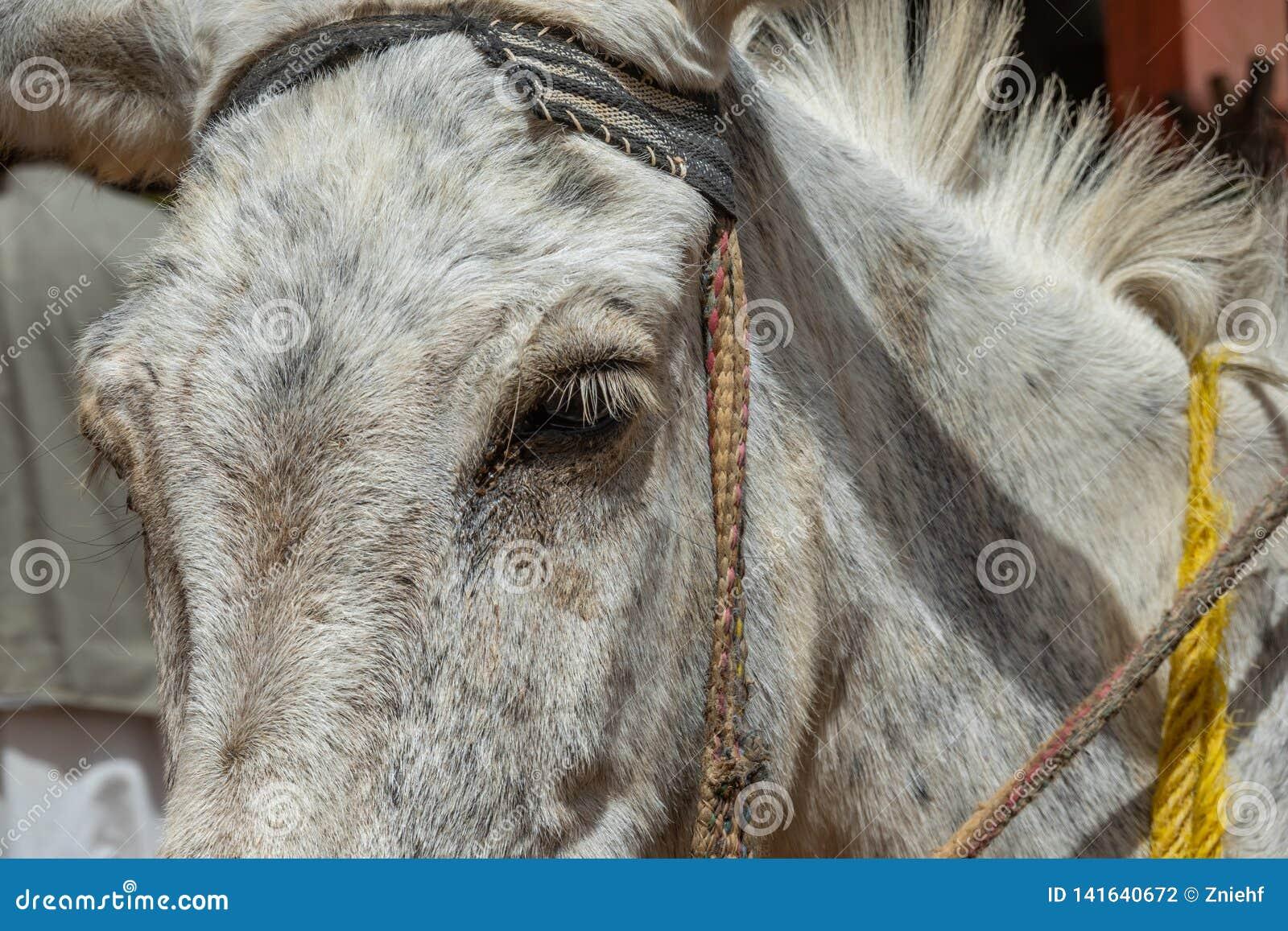 Demi portrait d un âne blanc