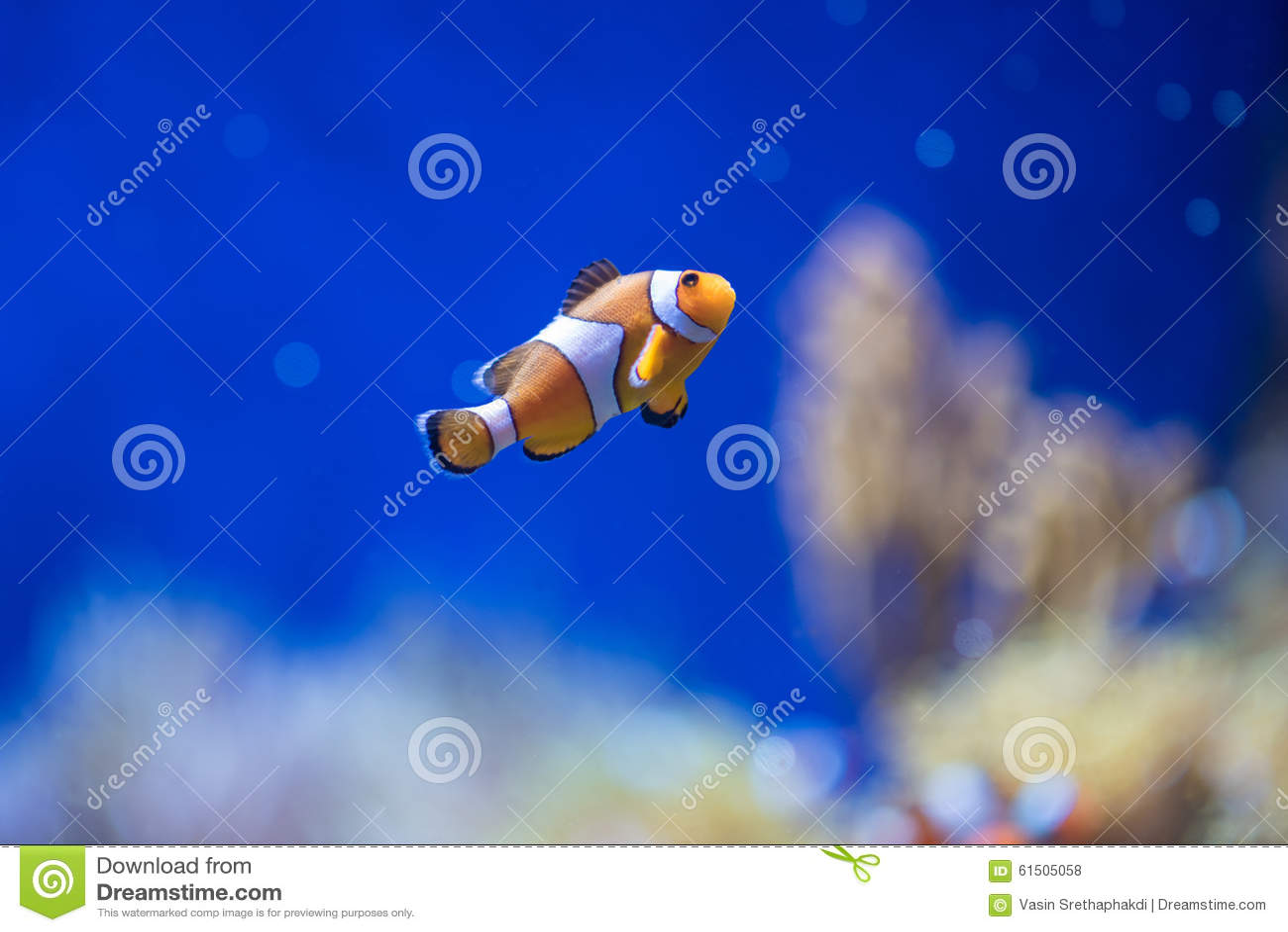 orange jpg deep blue - photo #24