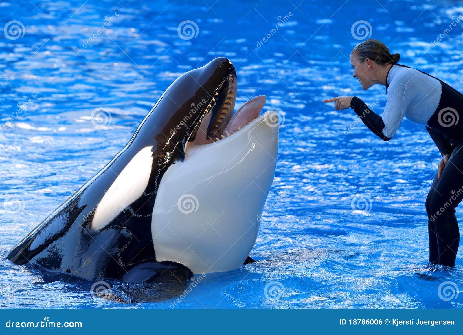 Demostración de la orca