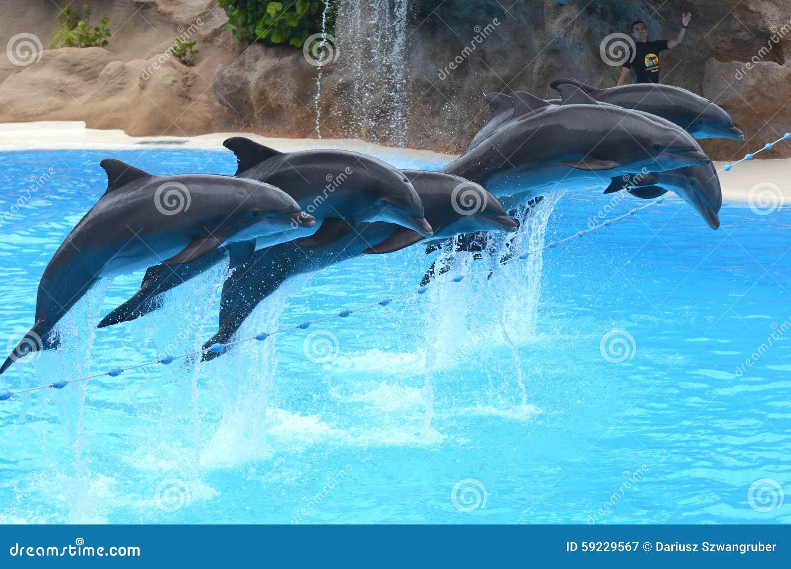 Download Demostración Del Delfín En El Parque De Loro En Puerto De La Cruz En Tenerife, Islas Canarias Fotografía editorial - Imagen de feliz, canario: 59229567