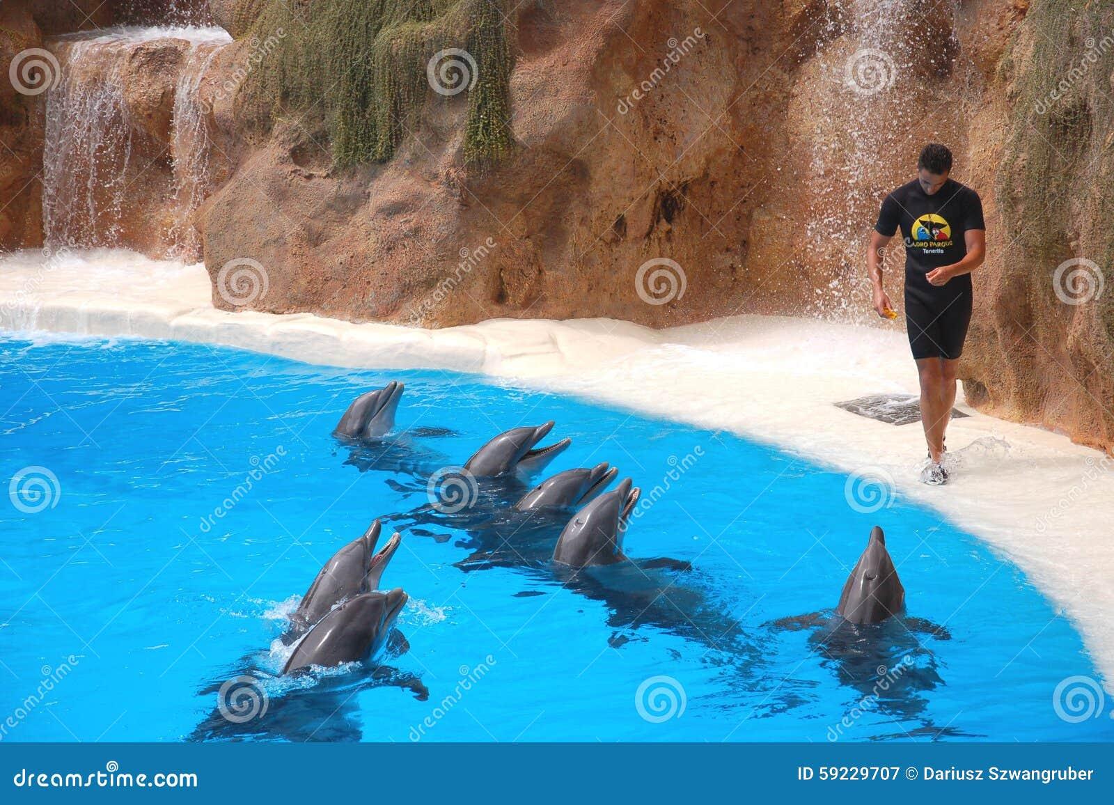Download Demostración Del Delfín En El Parque De Loro En Puerto De La Cruz En Tenerife, Islas Canarias Fotografía editorial - Imagen de cubo, biggest: 59229707