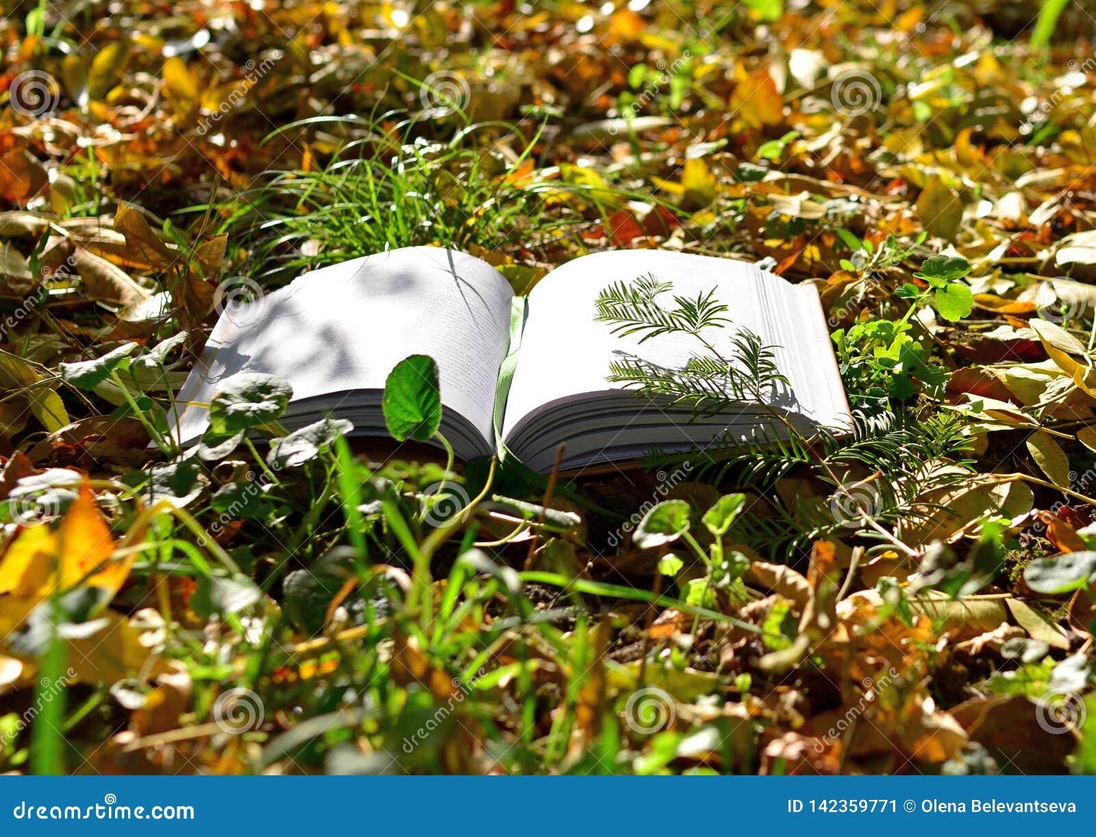 Den öppnade boken ligger på gräset i parkerar