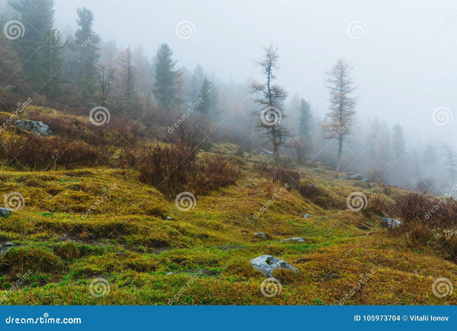 Den Akkem dalen i naturliga Altai berg parkerar