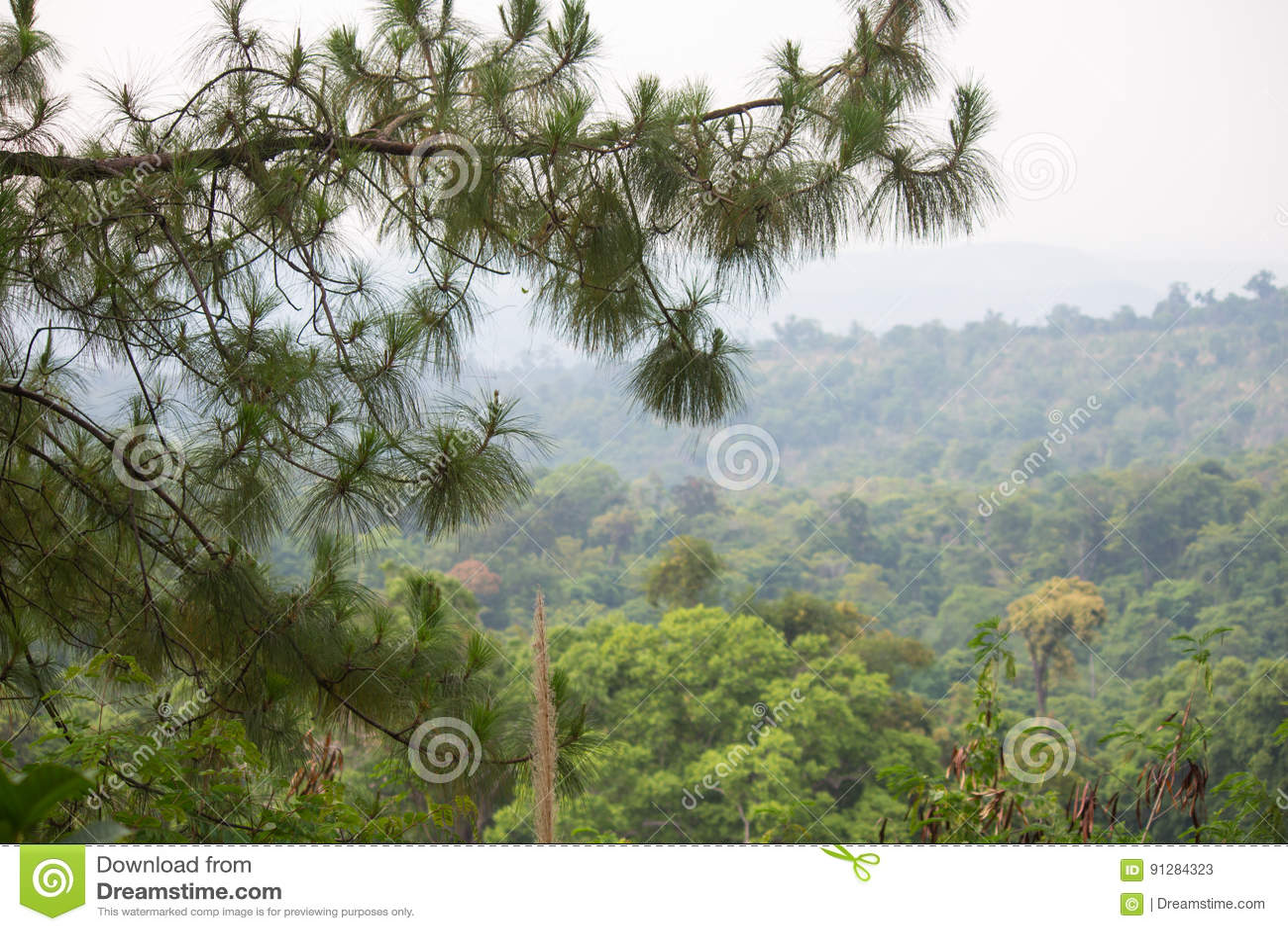 Den bakgrundsbaikal laken sörjer treen