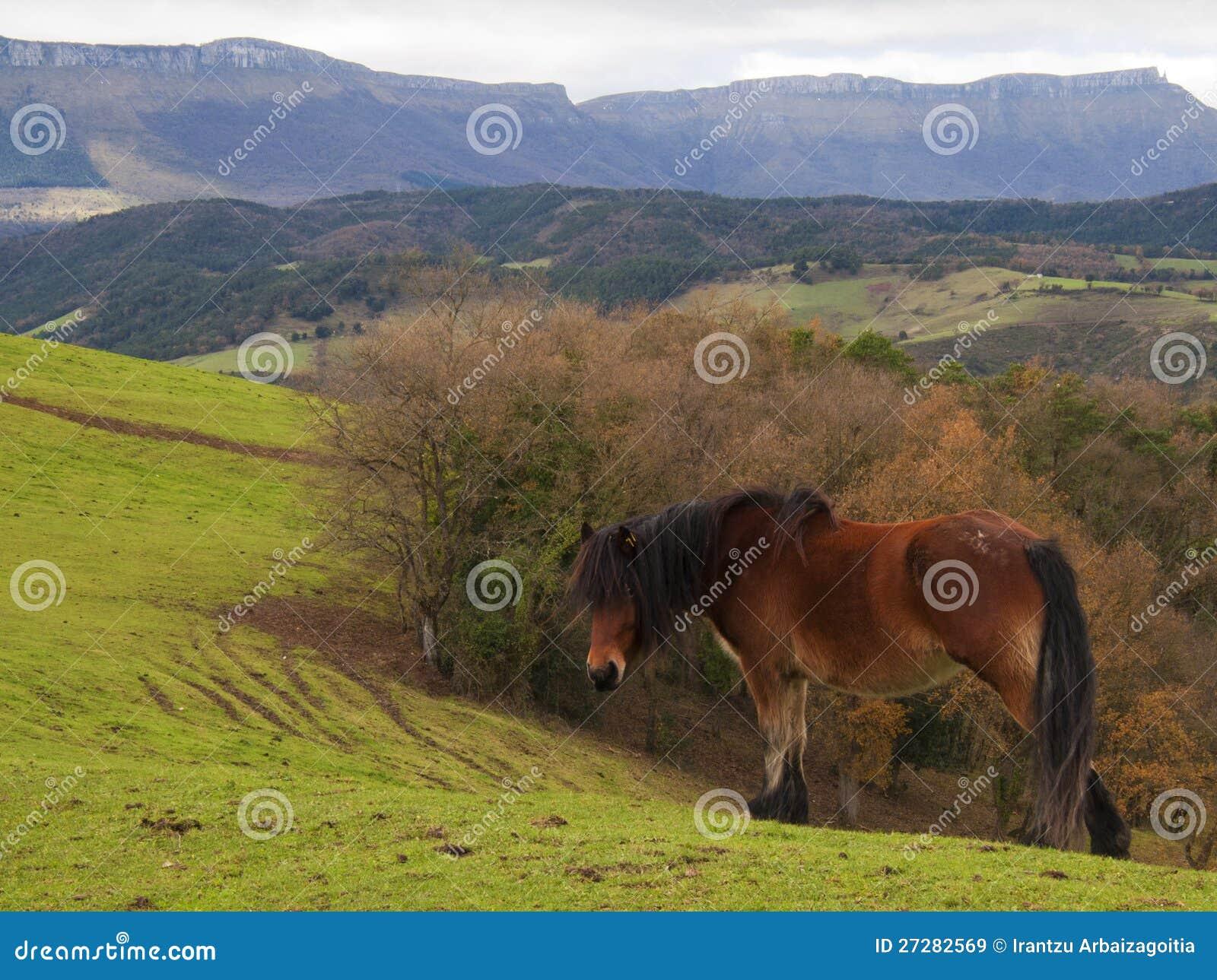 Den Brown hästen i greenen betar