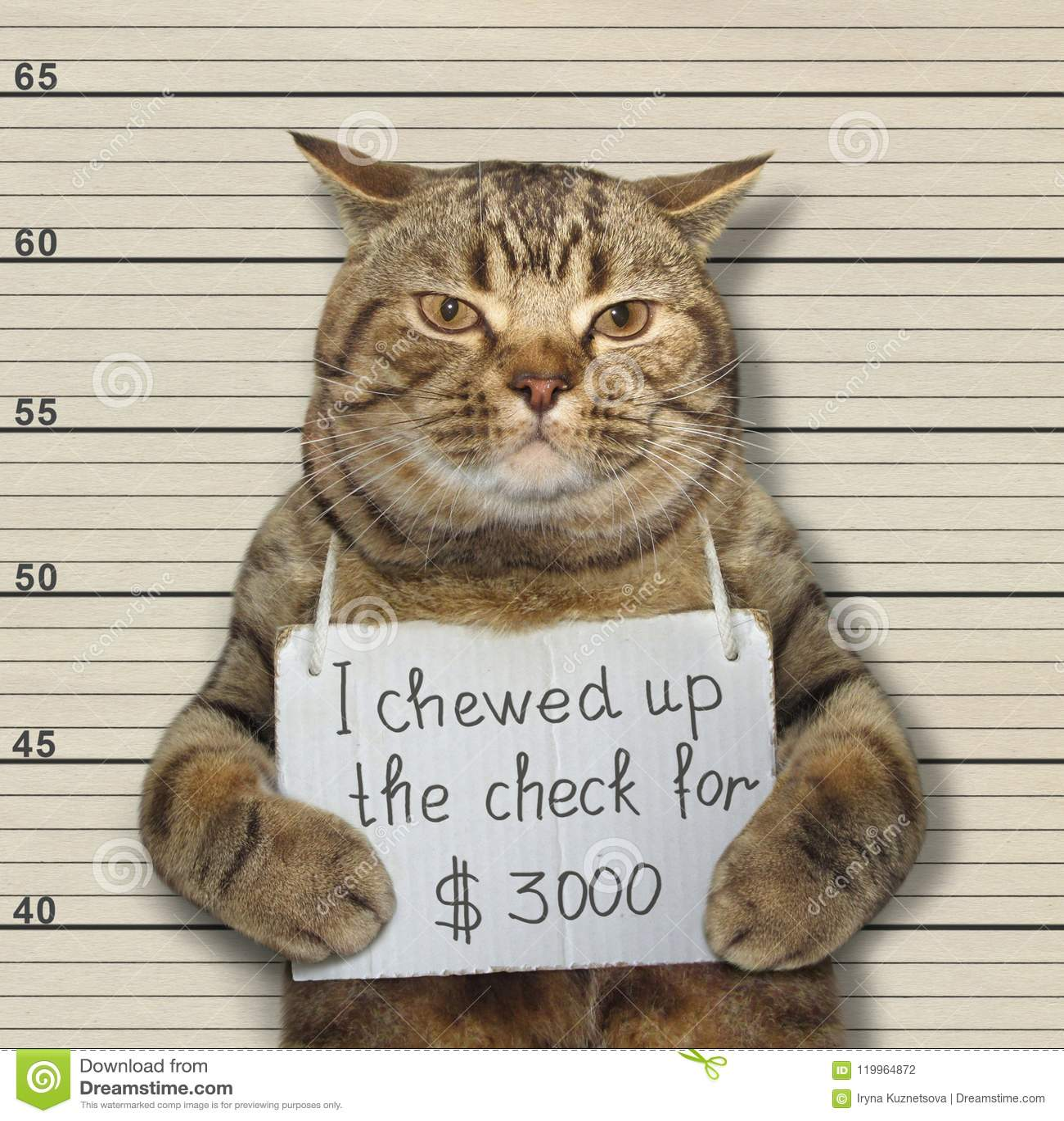 Den dåliga katten tuggade upp kontrollen