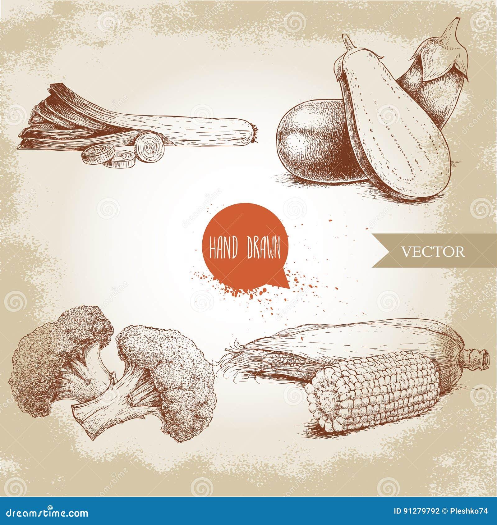 Den drog handen skissar stilgrönsakuppsättningen Purjolök med skivor, aubergine med den halva aubergineet, broccoli och majsmajs