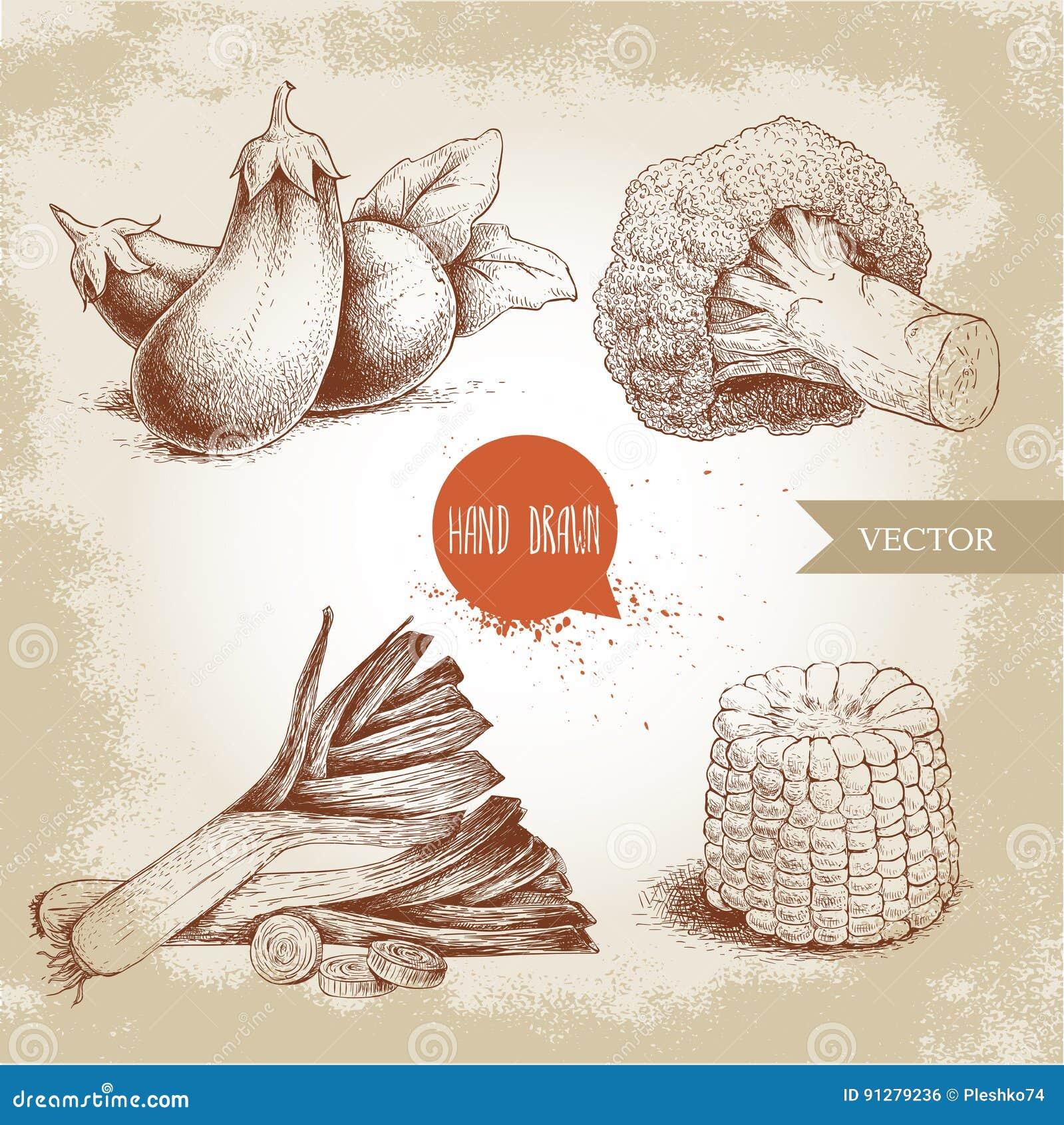 Den drog handen skissar stilgrönsakuppsättningen Purjolökar, aubergine, broccoli och majsskiva Ny mat för lantgård