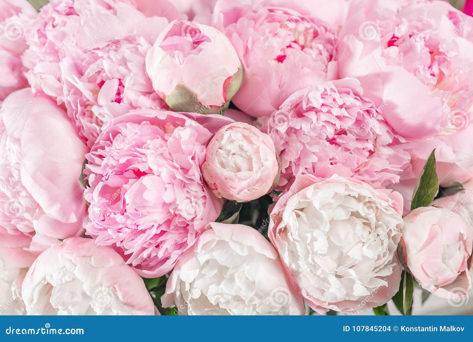 Den eleganta buketten av många pioner av rosa färger färgar tätt upp Härlig blomma för någon ferie Massor av nätt och