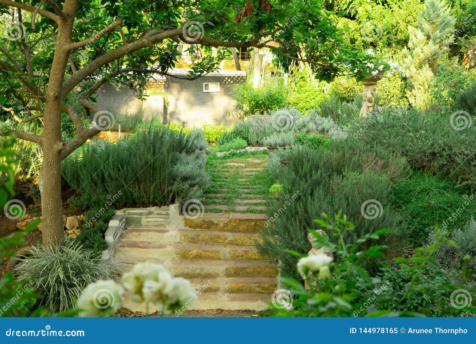 Den engelska stugaträdgården på gräsmattaträdgård för grönt gräs, det infomal landskapet dekorerar med rosor, rosmarinö