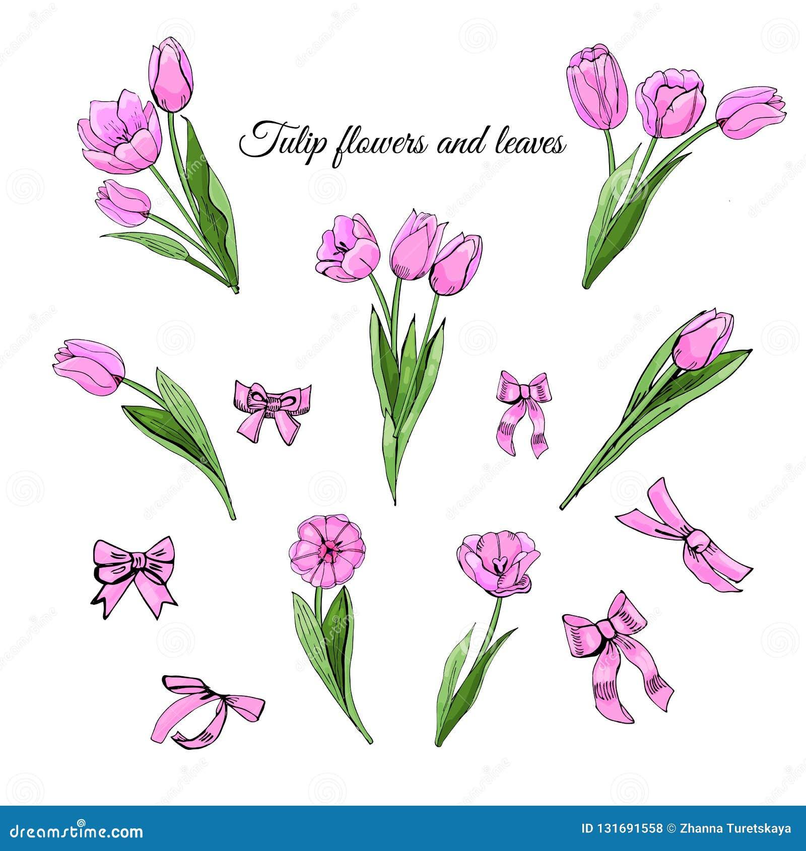 Den färgade fastställda handen som dras, skissar med rosa tulpanblommor, sidor och pilbågar som isoleras på vit bakgrund