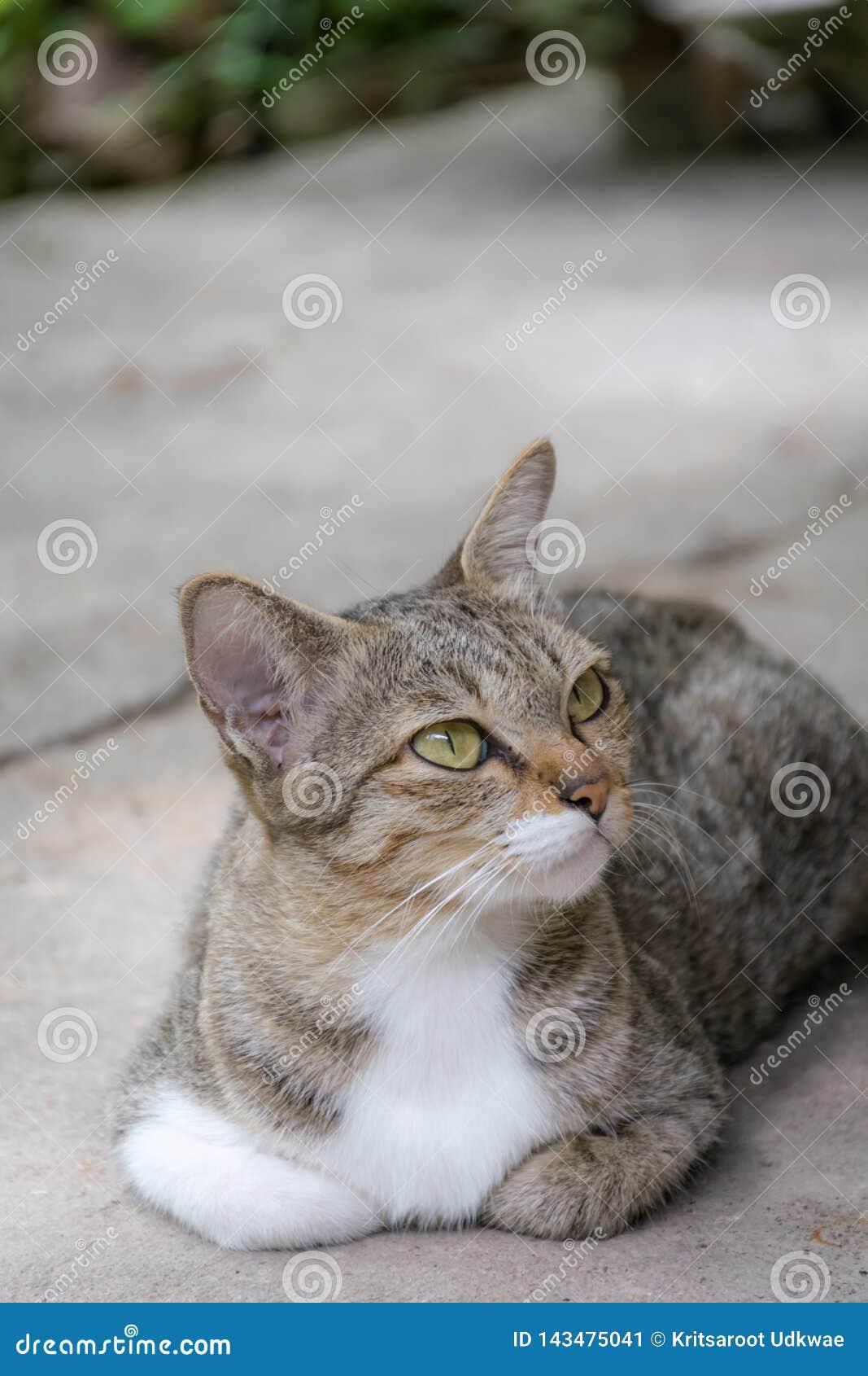 Den förtjusande katten är lägger ner på jordning