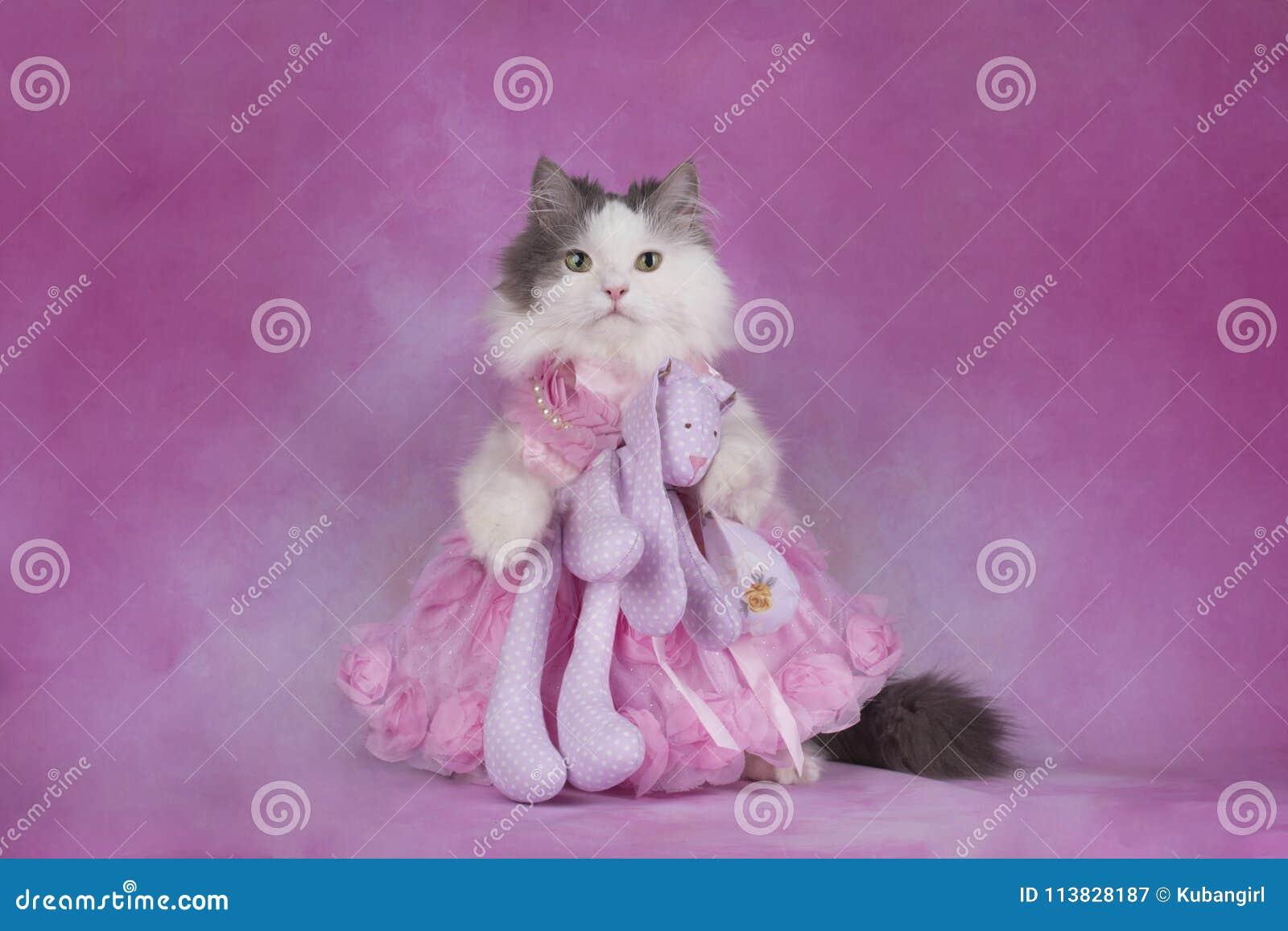 Den fluffiga katten i en rosa klänning rymmer en favorit- leksak