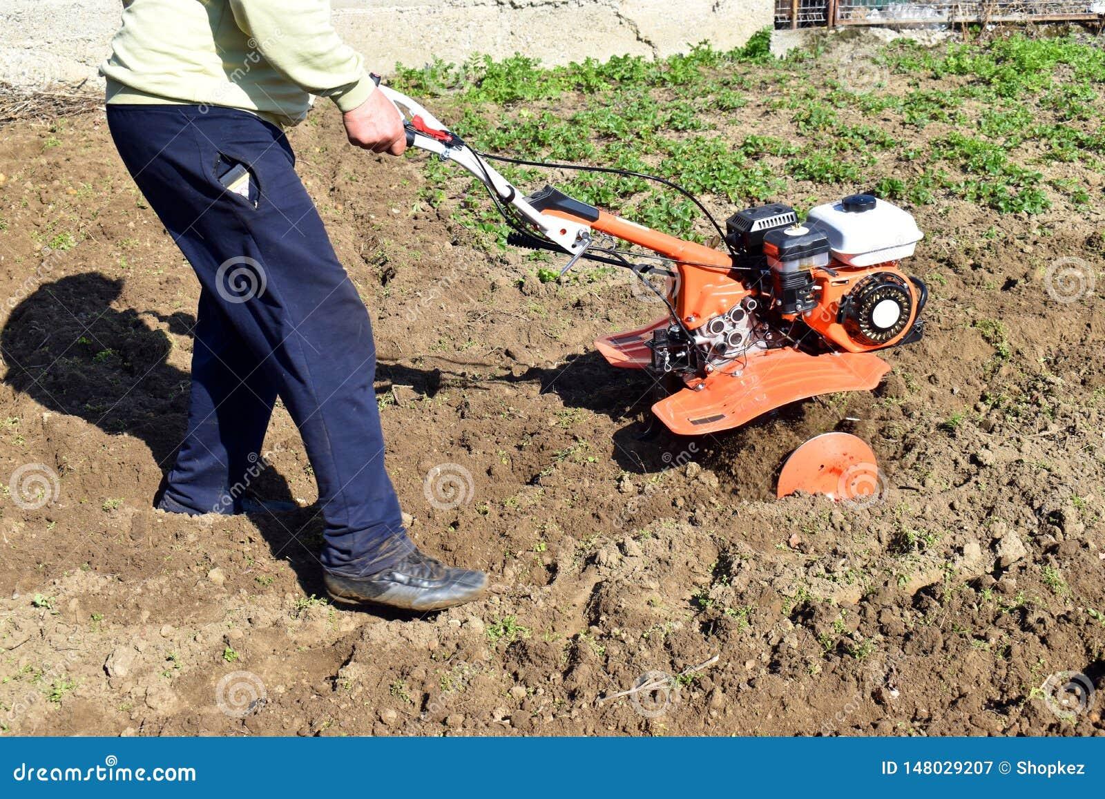 Den gå traktoren på risfältet för arbetsplogploger bearbetar med maskin litet traktorbruk för kassalåda jorden för risodling Euop