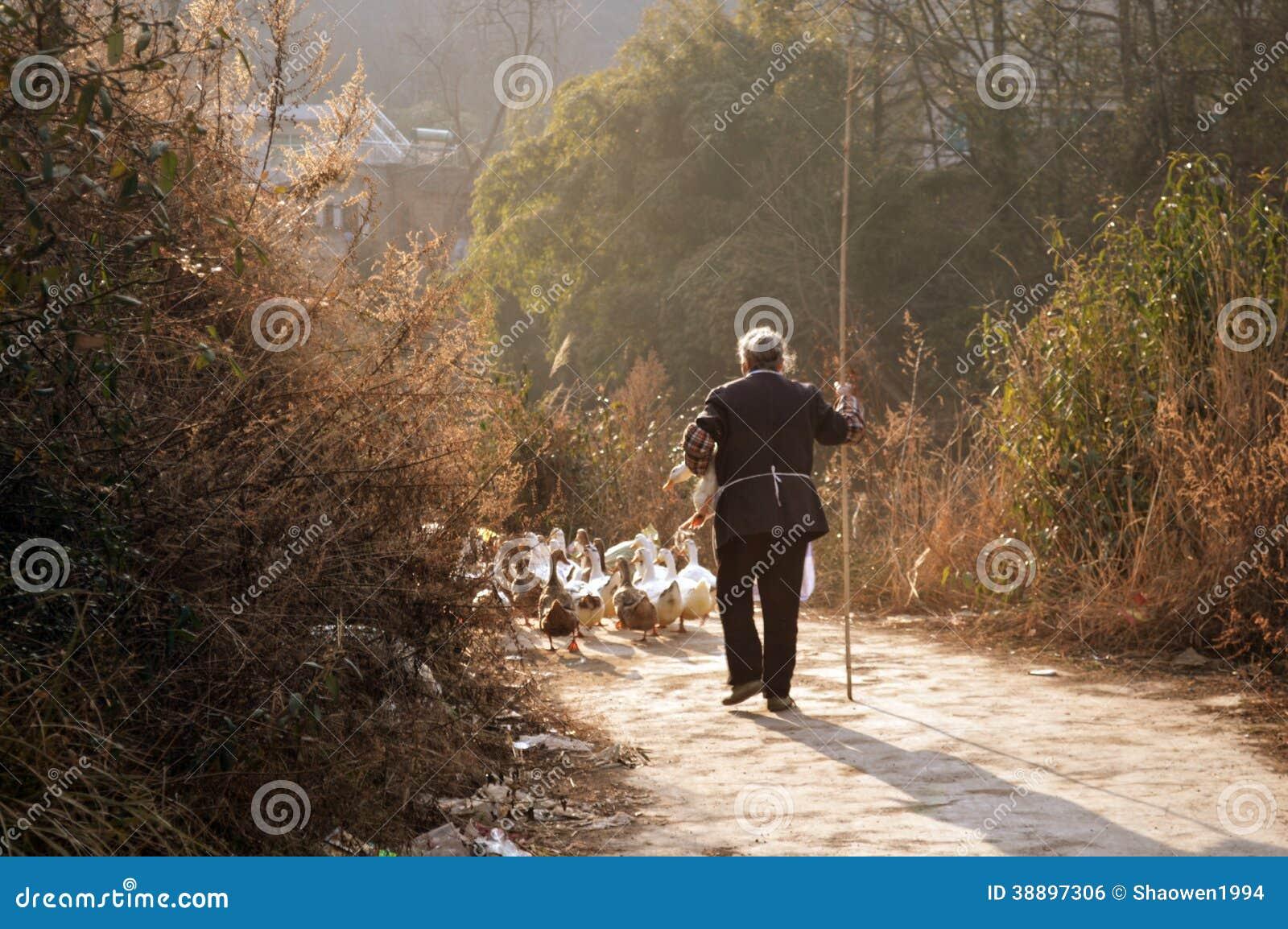 Den gamla damen i en and