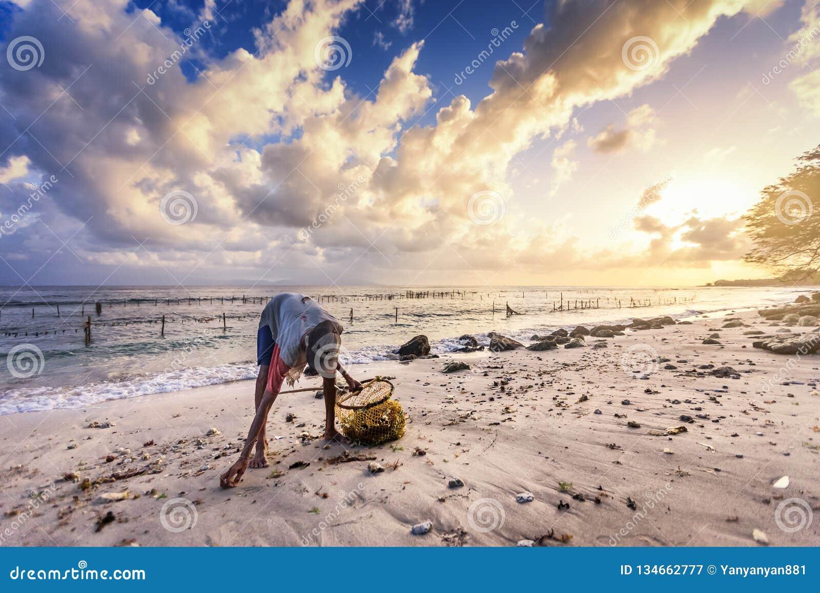 Den gamla fattiga kvinnan väljer upp havsväxt längs stranden