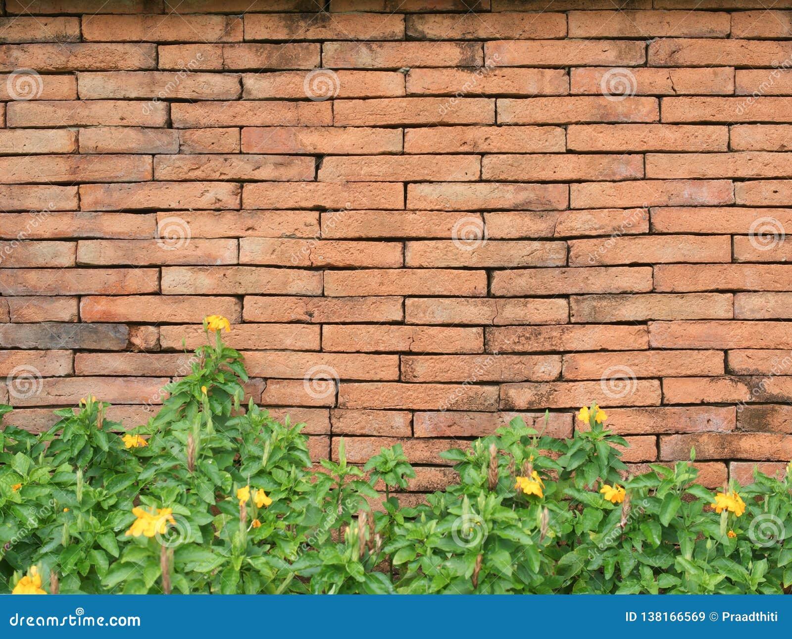 Den gamla väggen för röd tegelsten och busken