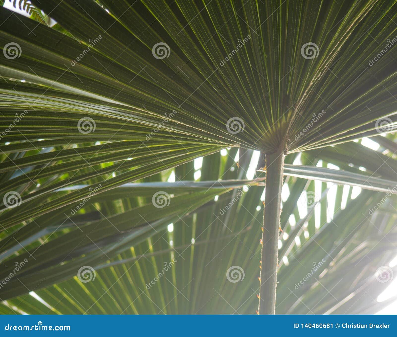 Den gröna palmträdet lämnar med panelljuset som skiner till och med texturen