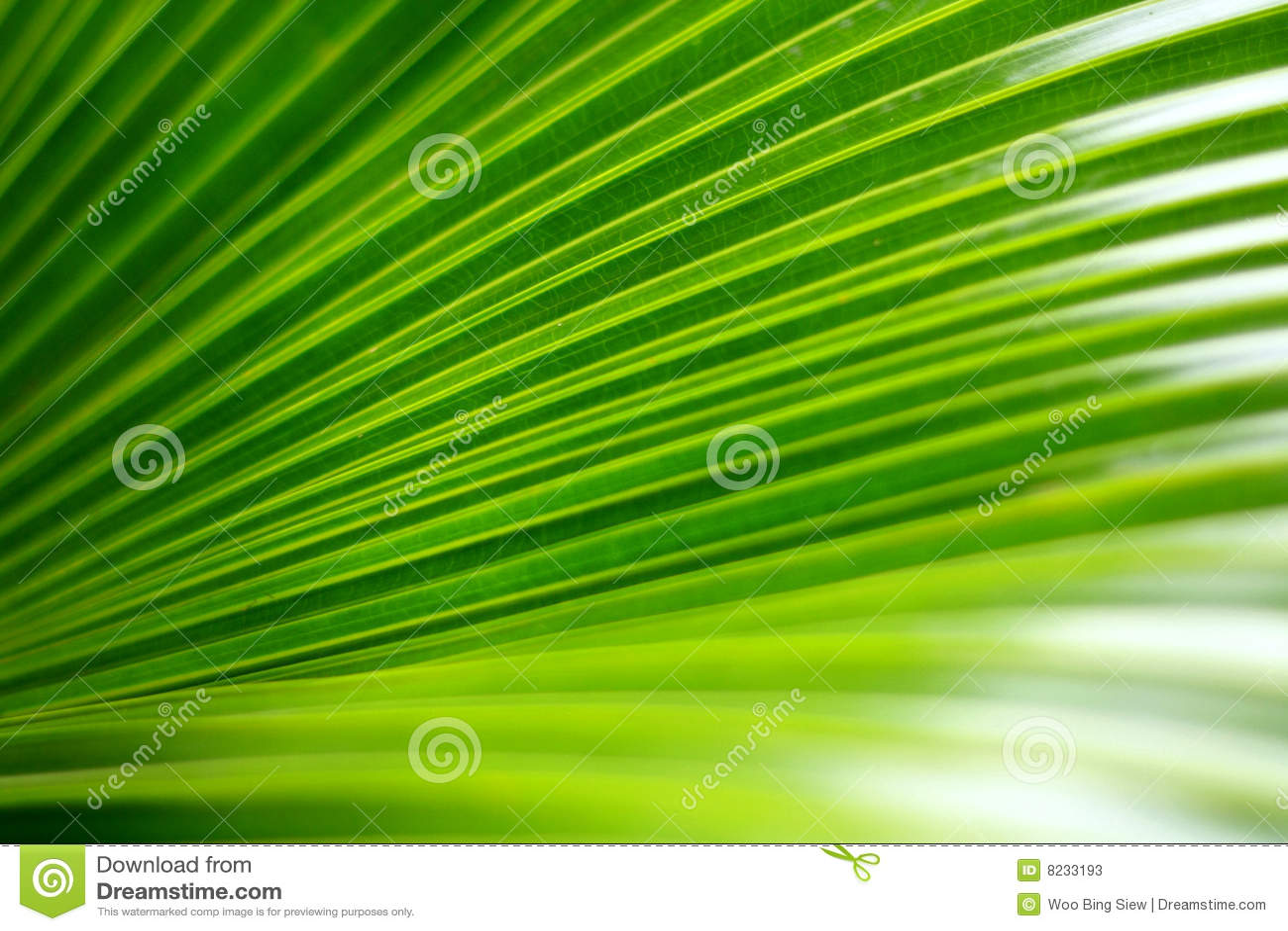 Den gröna leafen gömma i handflatan