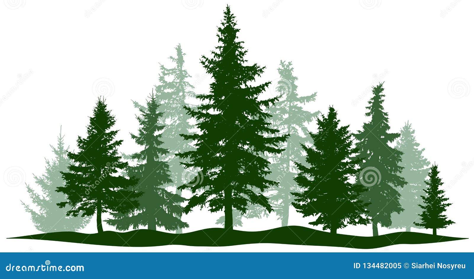 Den gröna skogevergreen sörjer, det isolerade trädet Parkera julgranen Individuella separata objekt