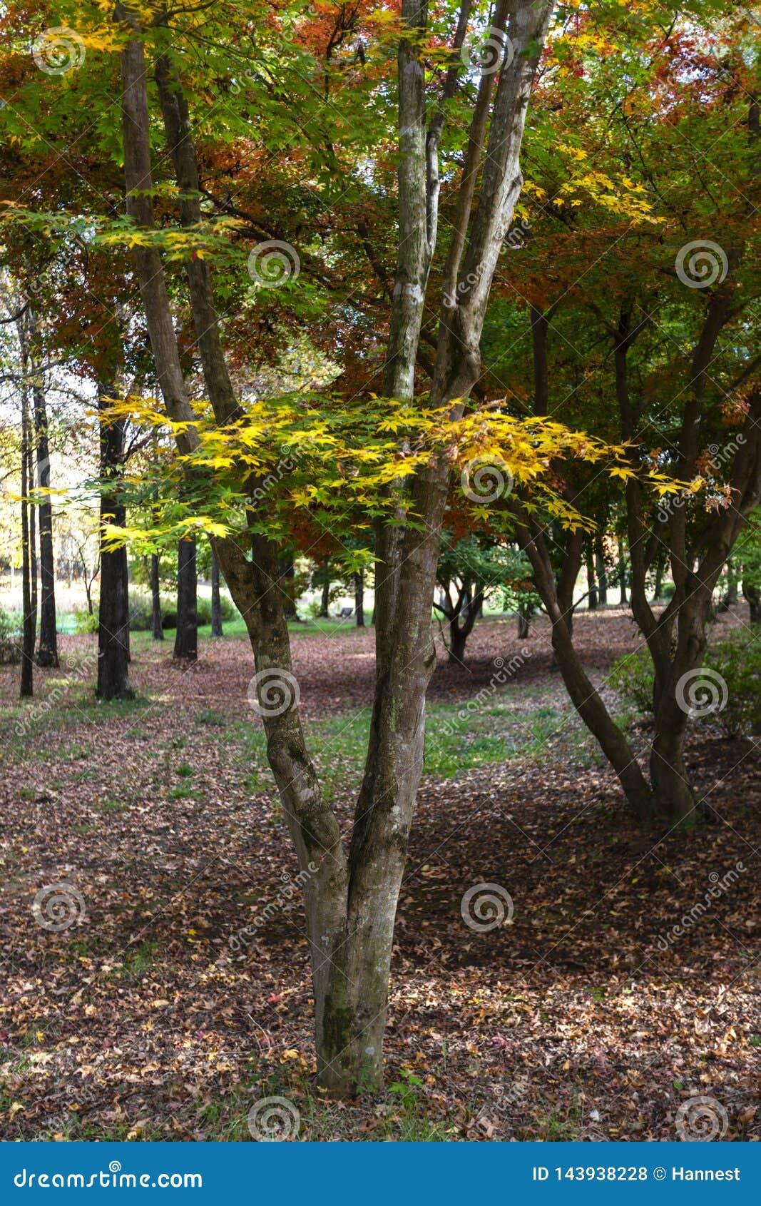 Den gula, gröna och röda hösten färgade sidor i trädet