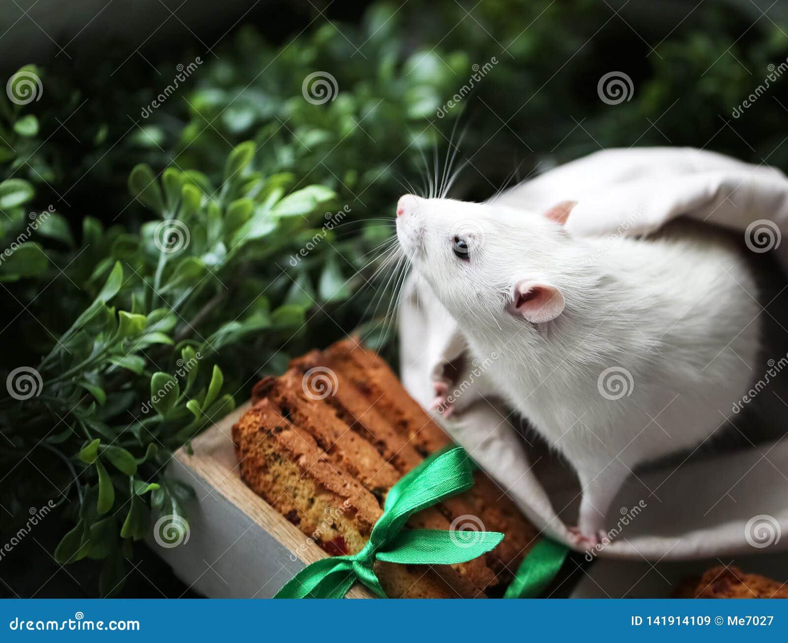 Den gulliga lilla utsmyckade husdjurmusen med festliga bakade kakor och satängbandet bugar framme av grönt gräs och lämnar backgr