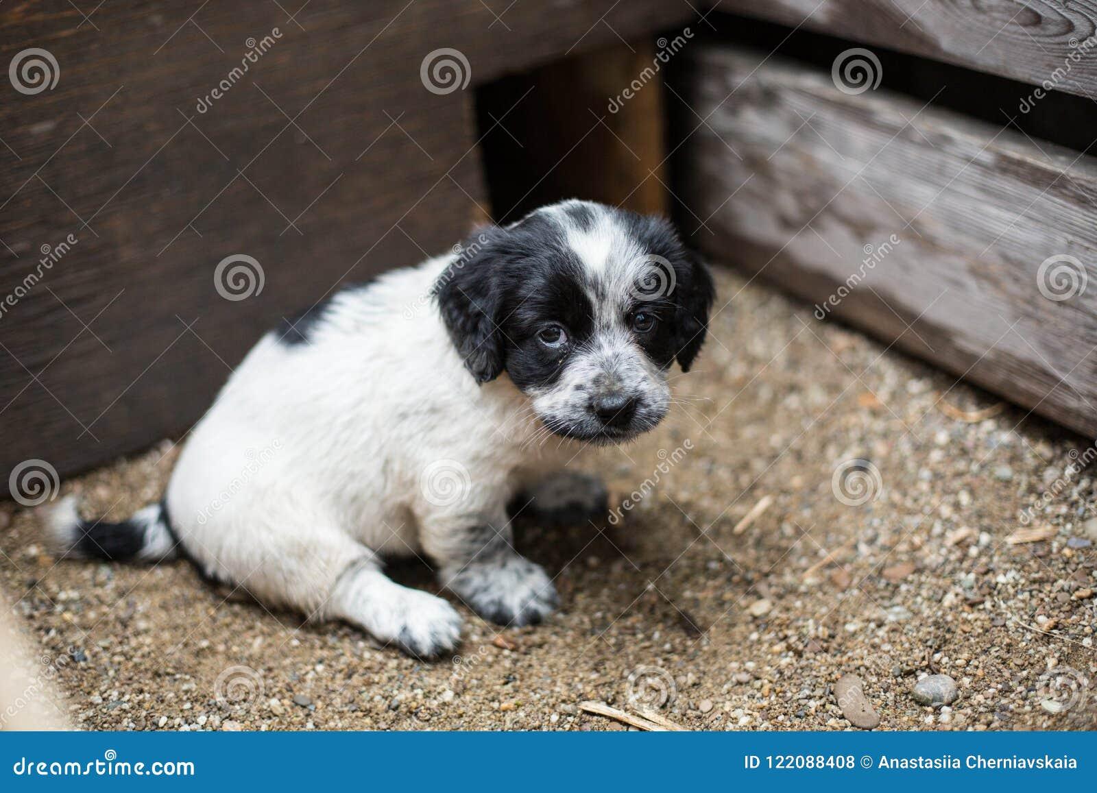 Den gulliga lilla valpen i en träask frågar att adopteras med hopp Hemlösen förföljer