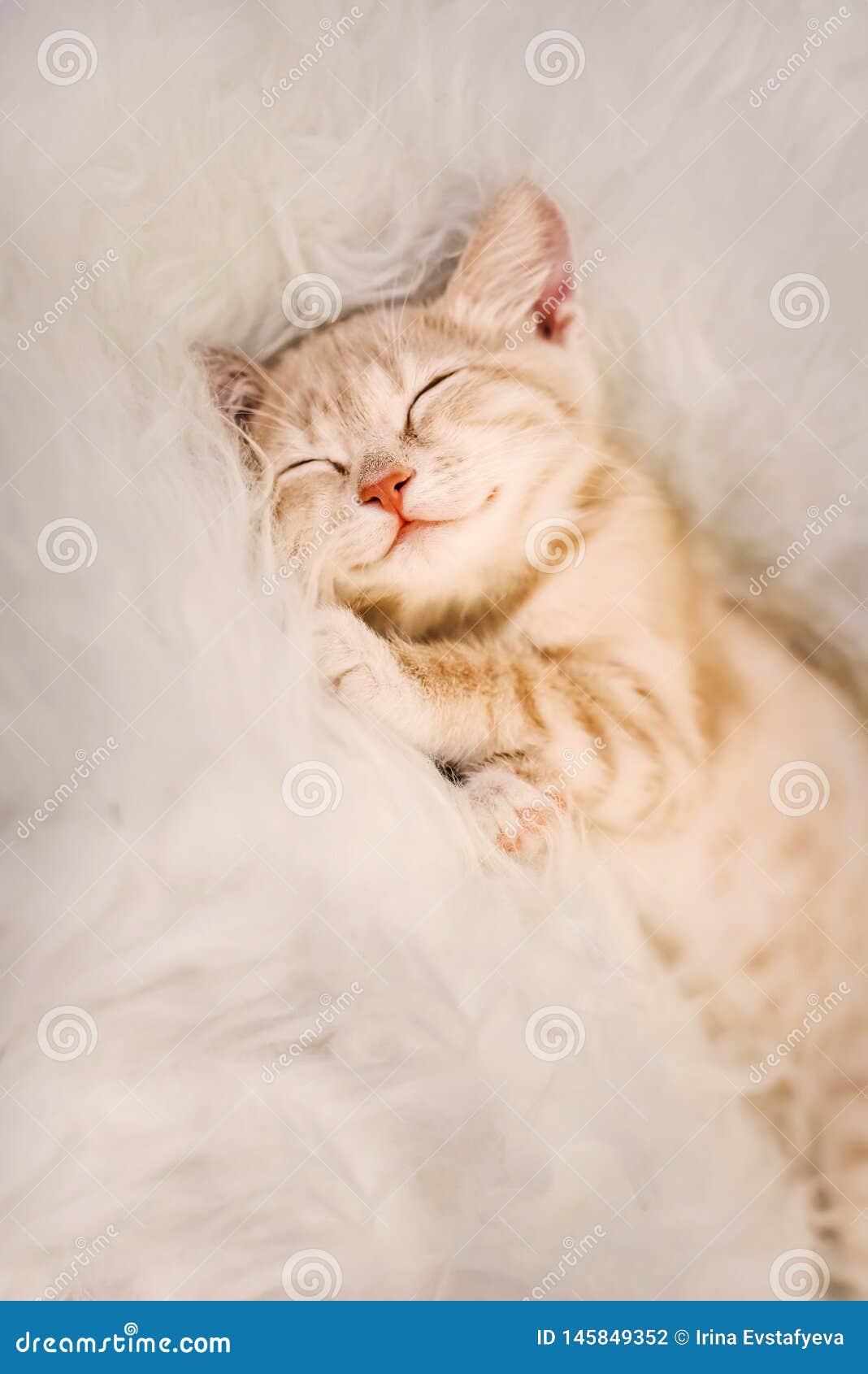 Den gulliga ljust r?dbrun kattungen ?r sova och le p? en p?lsfilt Begrepp hemtrevliga Hyugge och bra morgon