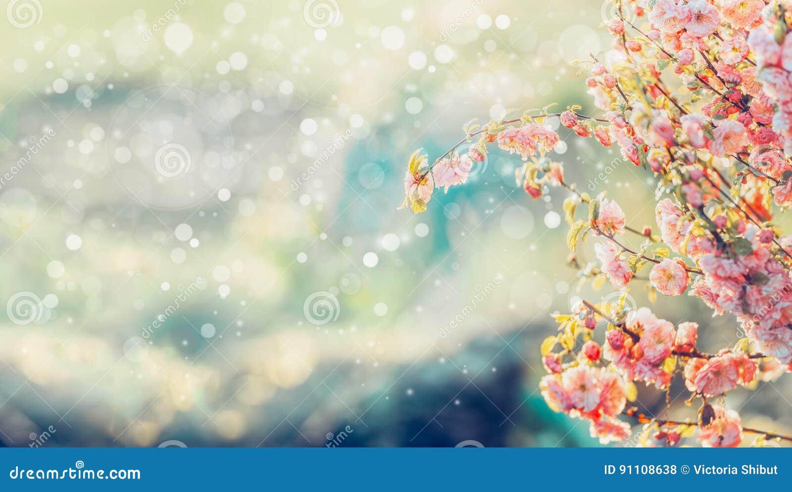 Den härliga trädblomningen i solljus och bokeh, blommande bakgrund för sommar i trädgård eller parkerar