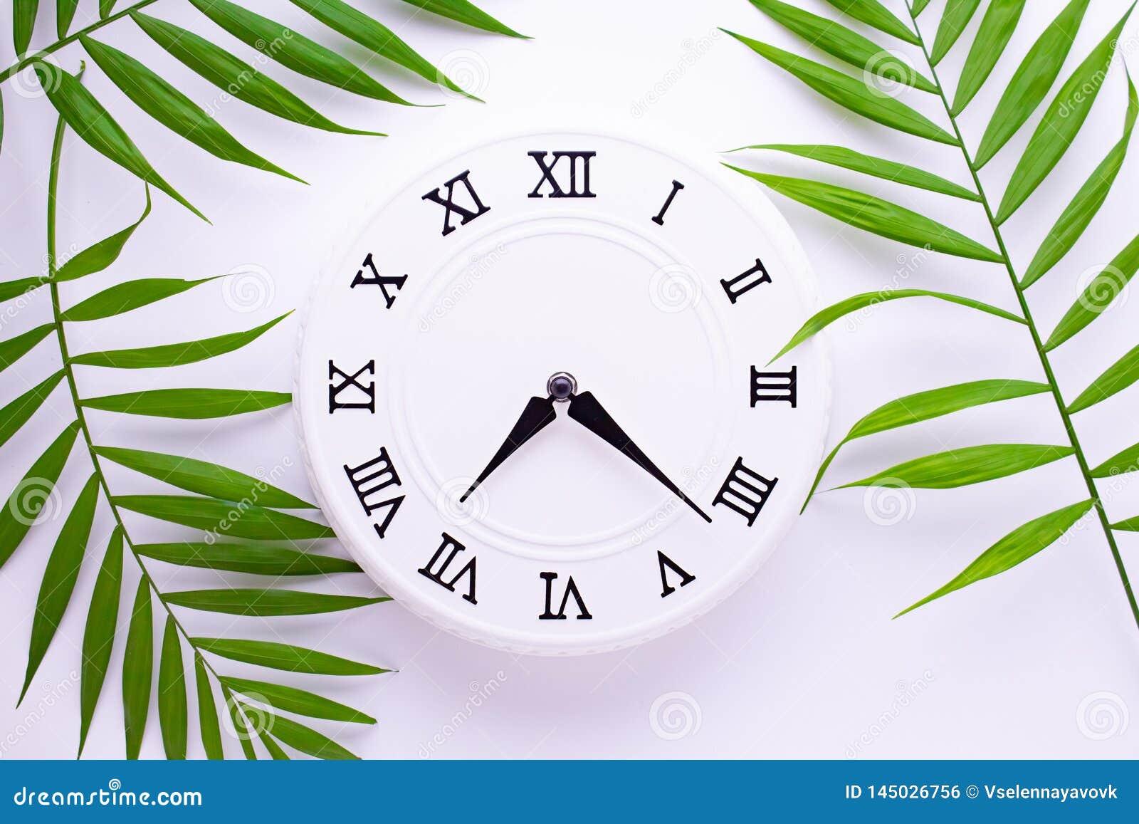 Den h?rliga vita klockan med sidor av tropiskt g?mma i handflatan Begreppet av tid feriegarneringbilder