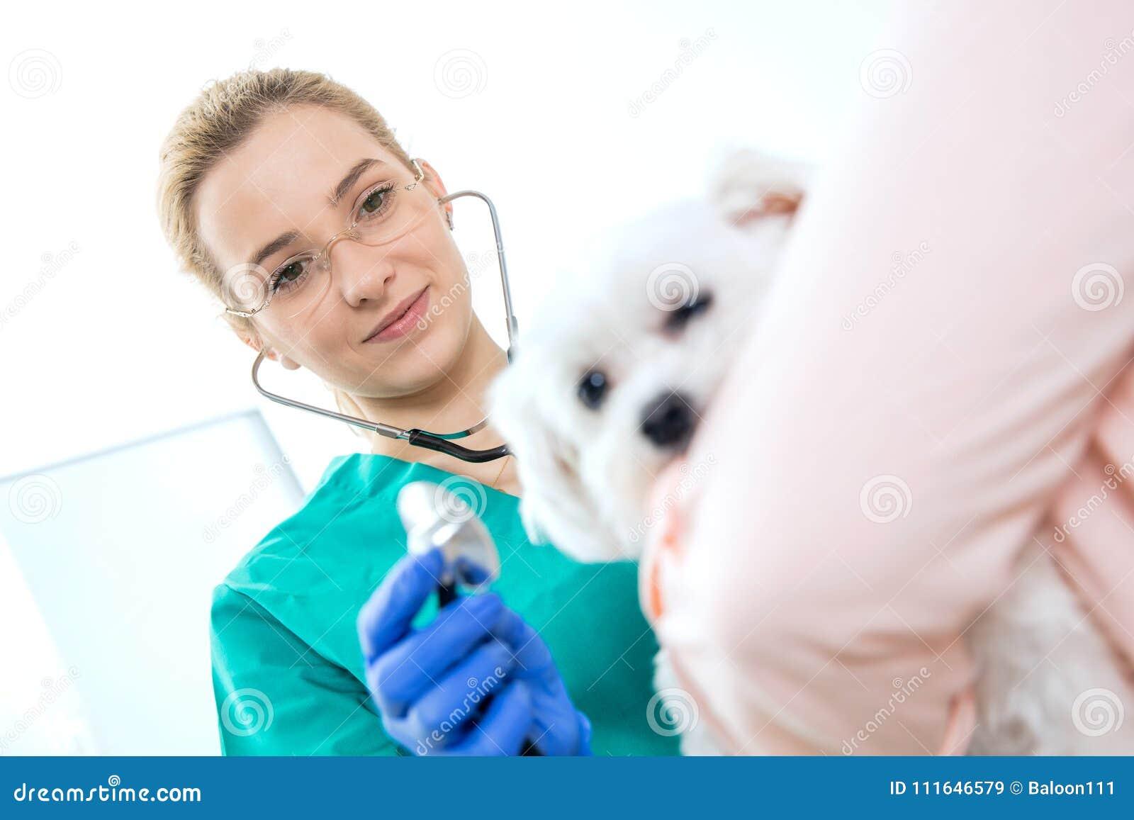 Den kvinnliga veterinären undersöker en hund