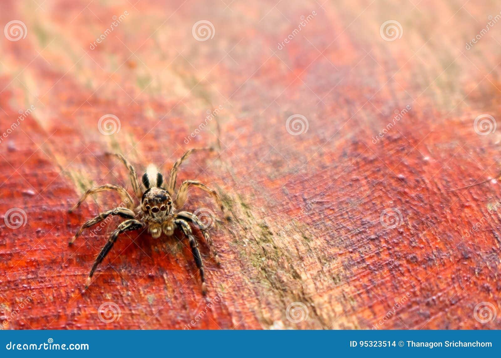 Den lilla färgrika spindelsamlingen