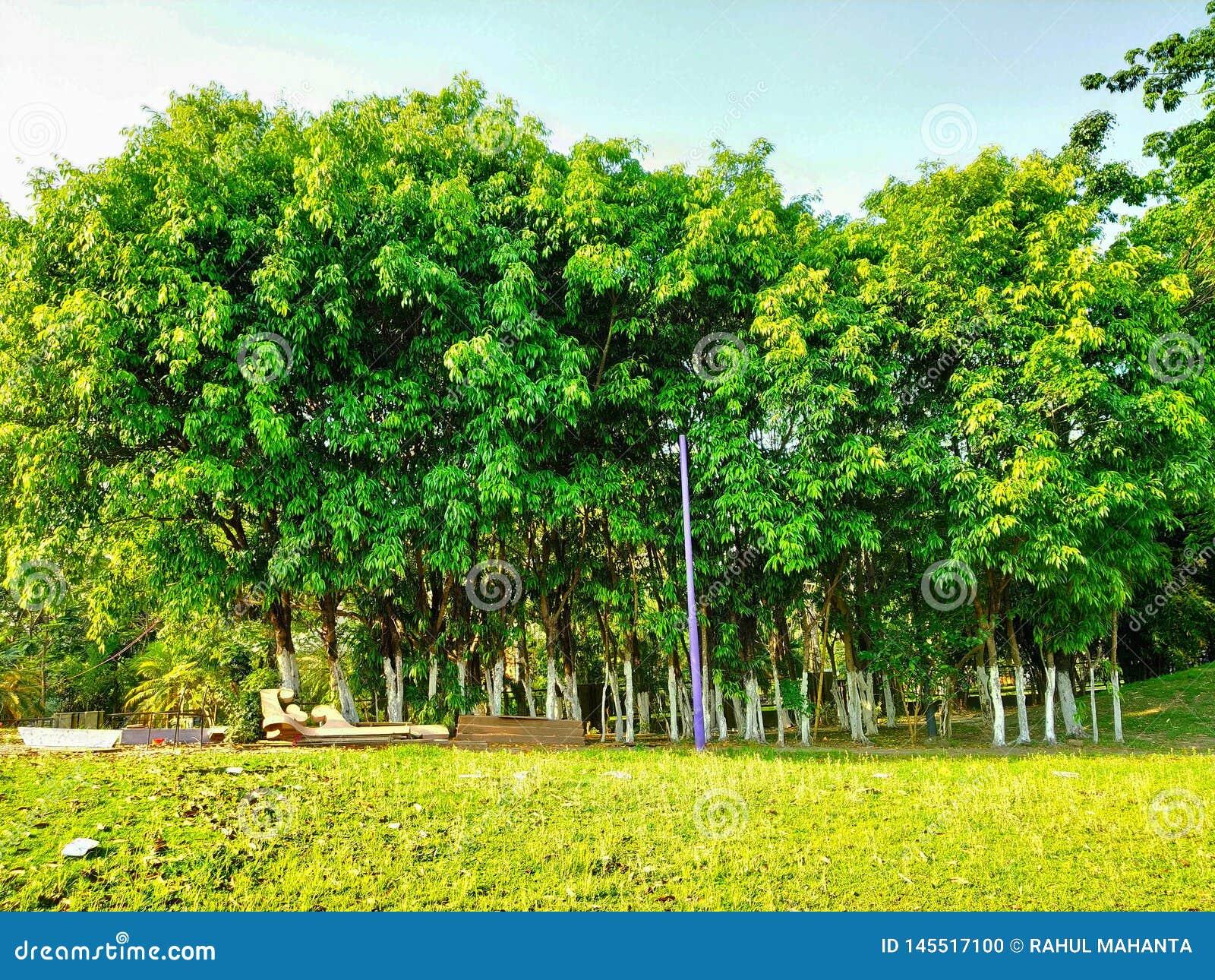 Den lilla skogen i trädgård ser så härlig, och sedd bakgrund för grön och blå himmel var magisk så härligt