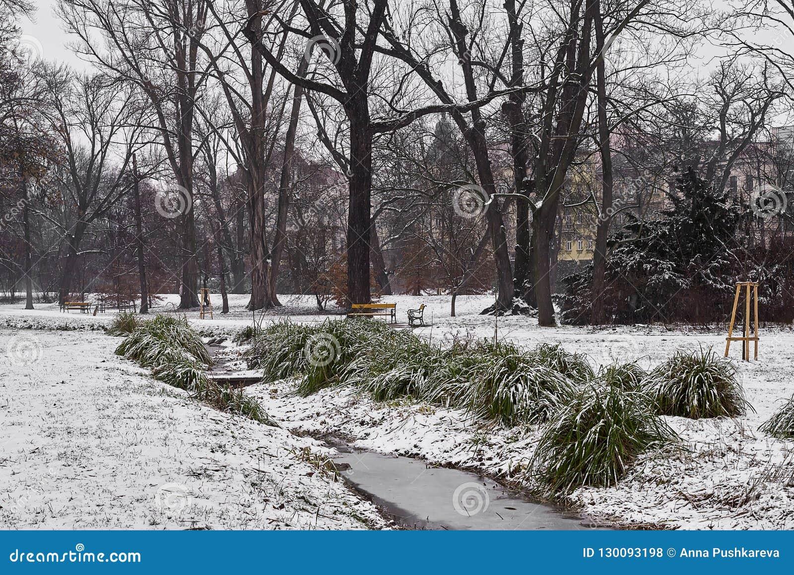 Den lilla strömmen och snö-täckte tofsar av gräs, gräsmatta och träd i stad parkerar i dimmig morgon