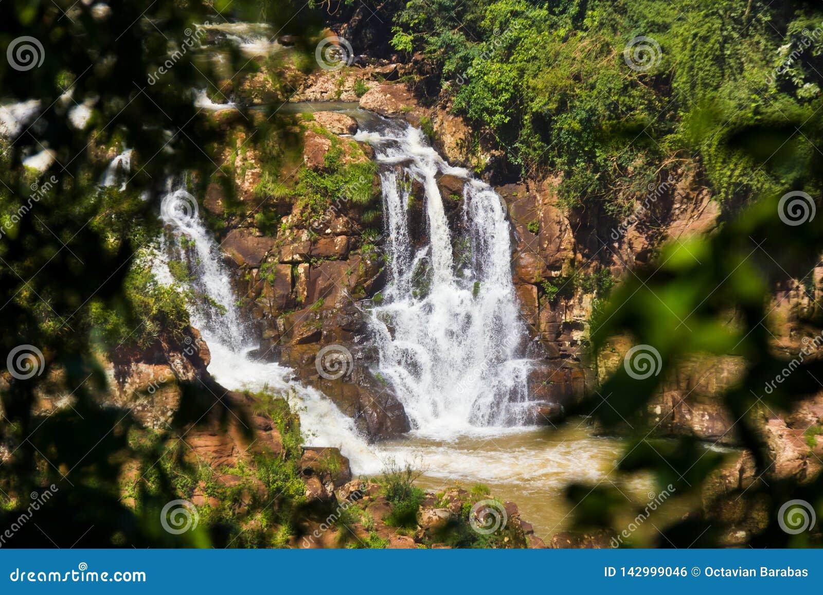 Den lilla vattenfallet i Sydamerika inramade mellan trädfilialen och sidor