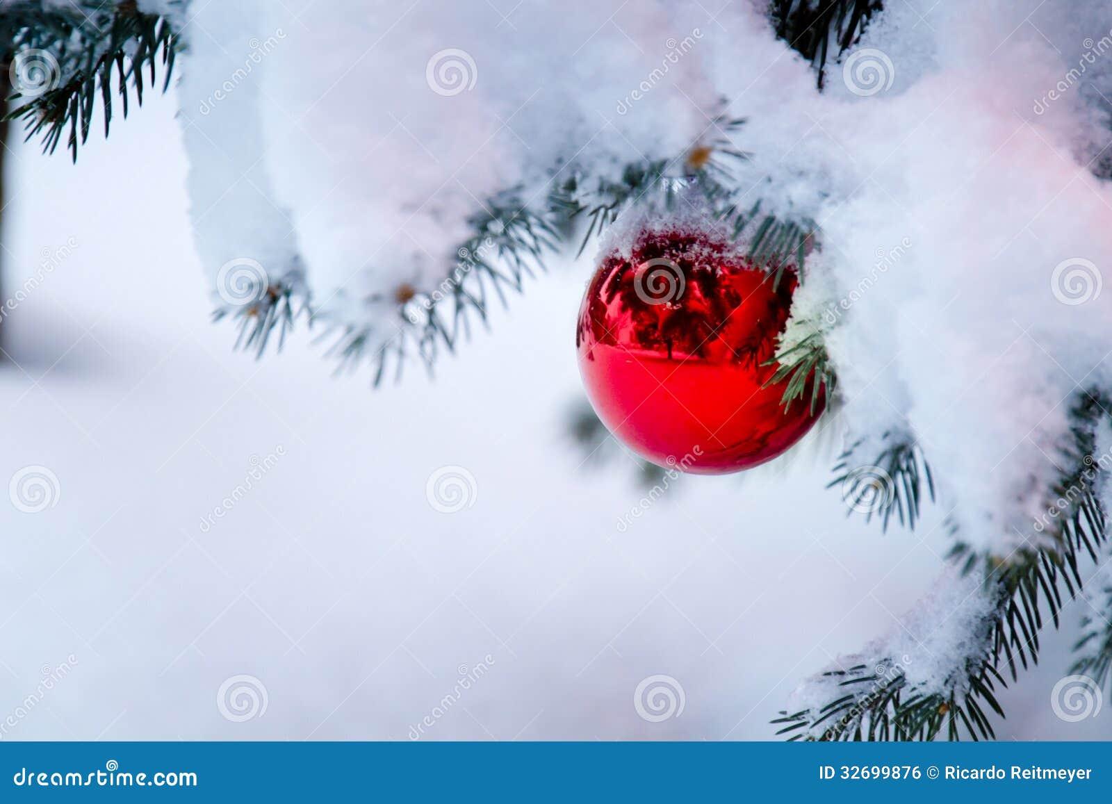 Den ljusa röda prydnaden som hänger från en snö, täckte julgranfilialen