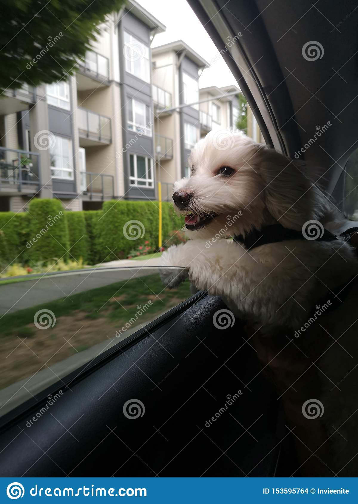 Den lyckliga hunden