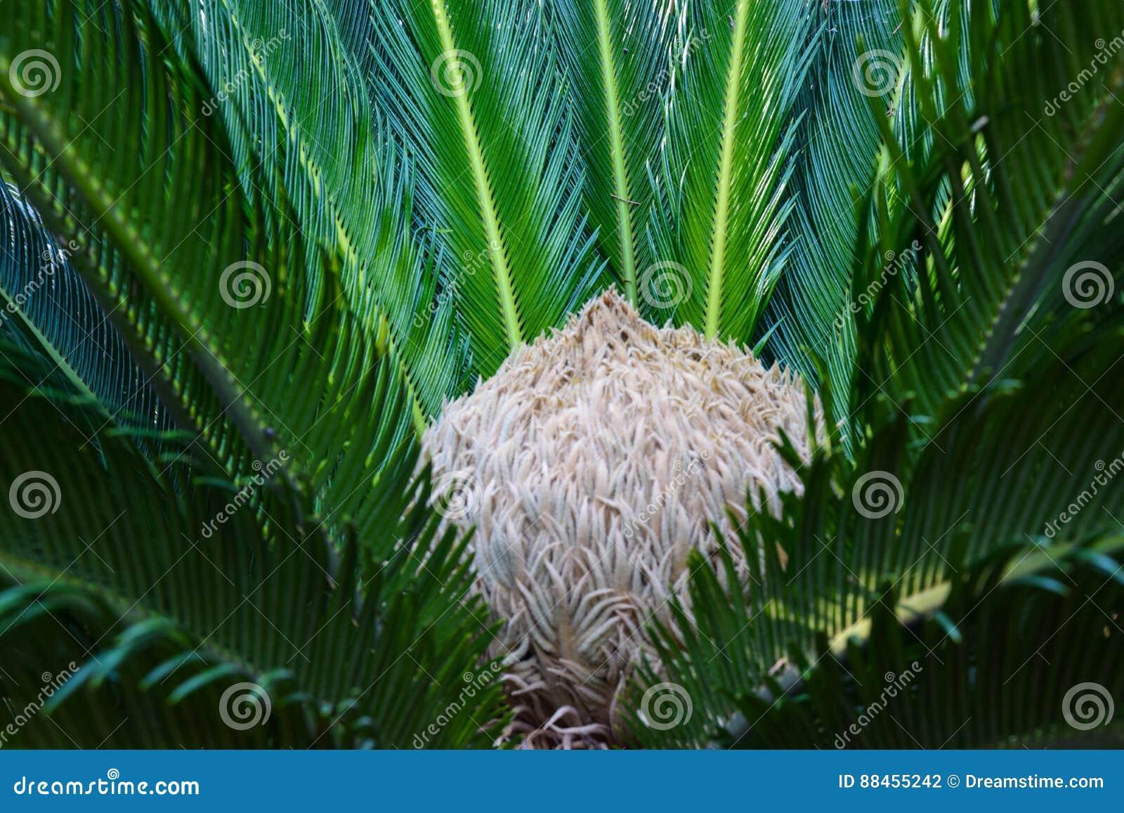 Den medelhavs- corsica ön gömma i handflatan den fotografi tagna treen