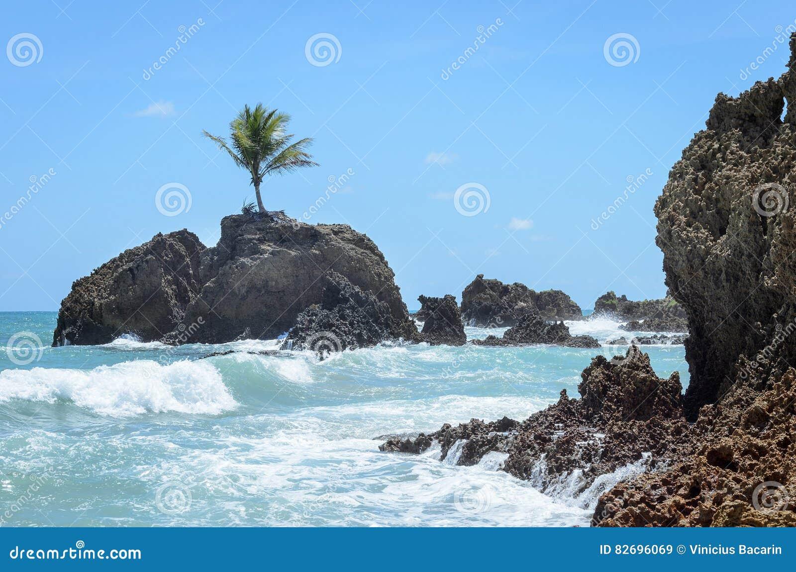 Den mini- ön med en enkel kokospalm som omges av havsvatten och något, vaggar bildande i ett paradisiacal landskap som mycket är