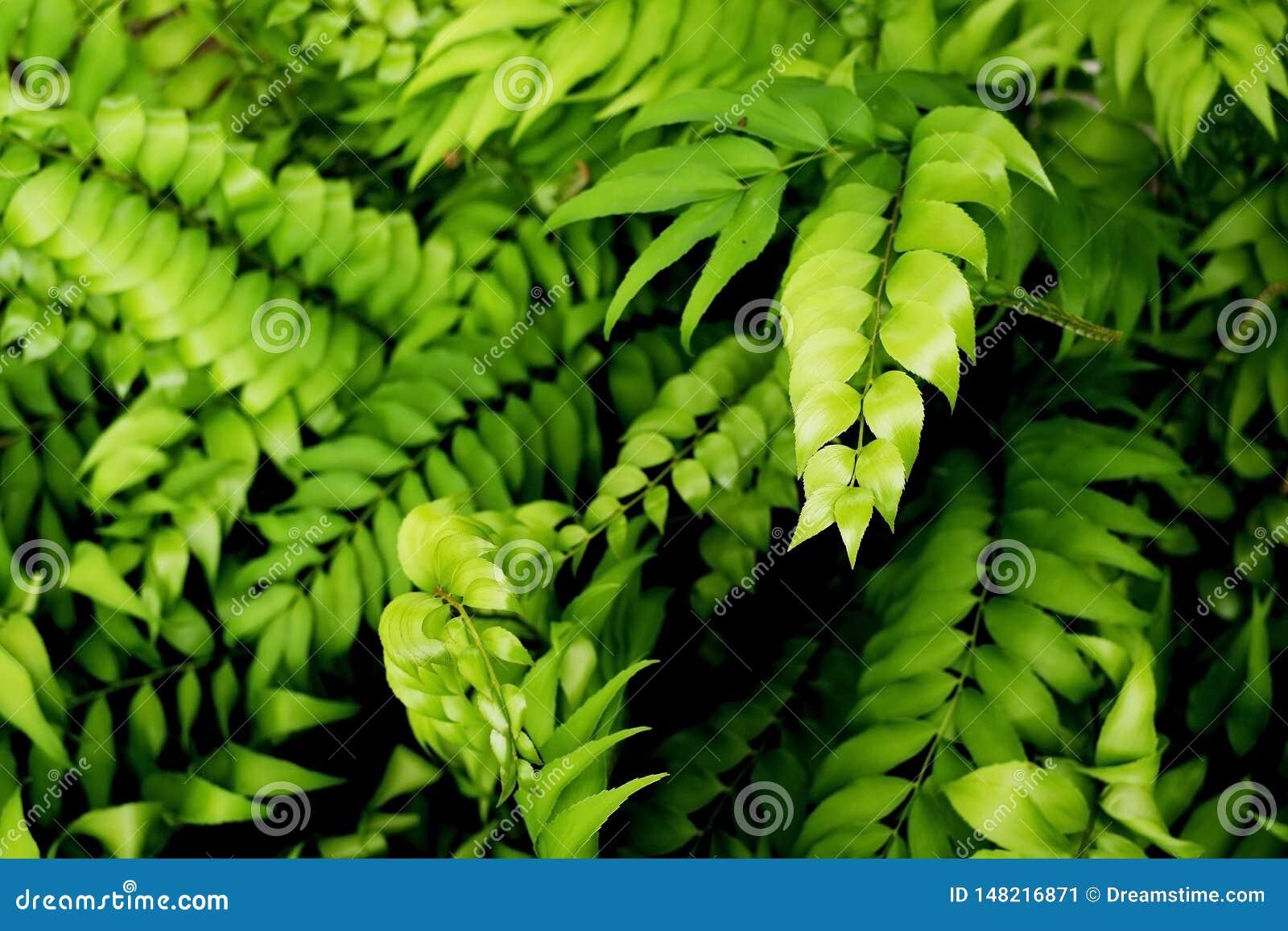 Den naturliga ormbunken lämnar i djungelbakgrund