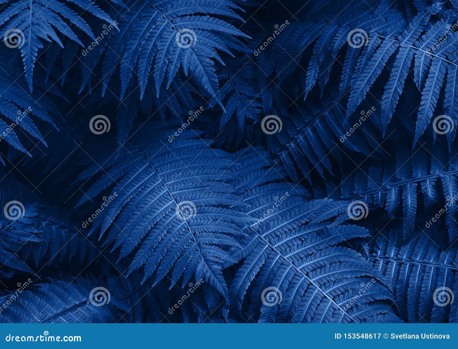 Den perfekta naturliga unga ormbunken lämnar modellbakgrund Blå mörk och lynnig bakgrund för din design Top besk?dar