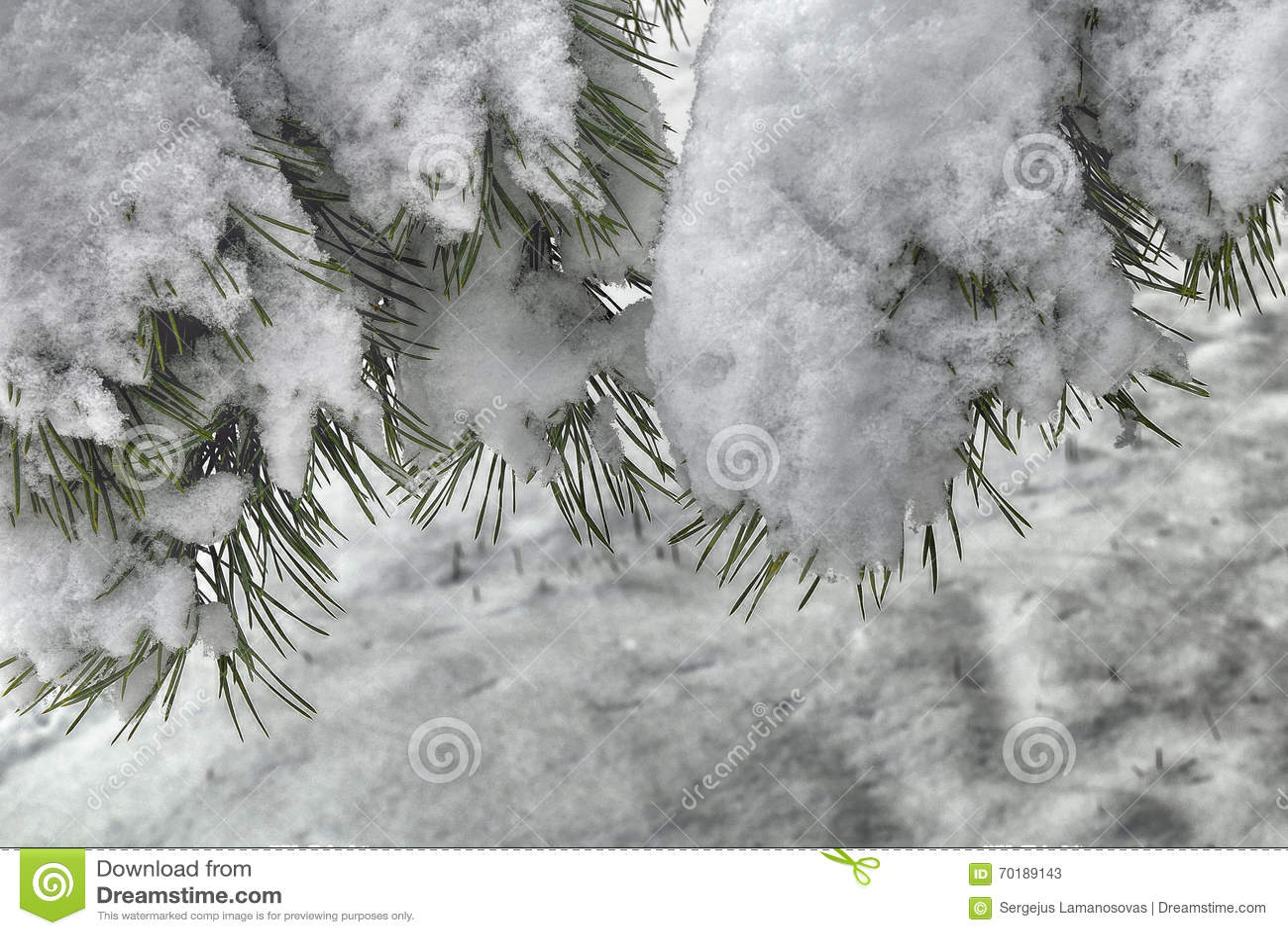 Den räknade filialen sörjer snow