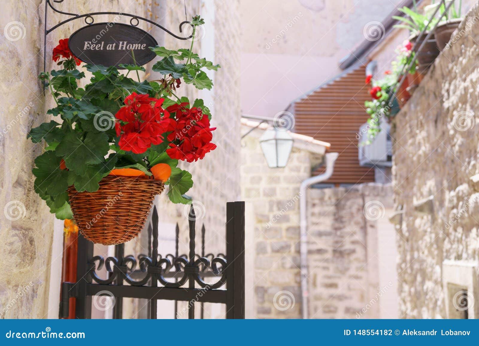 Den röda blomman och ett tecken i shoppar