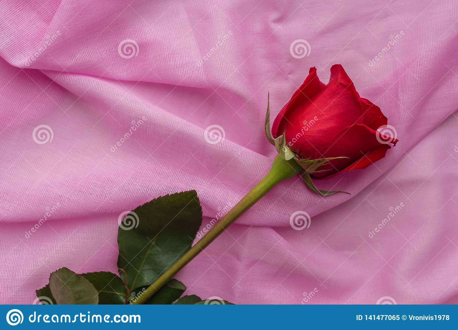 Den röda rosebuden ligger på en pastellfärgad rosa bakgrund av bomullstyg Valentindag, moderdag, kvinnors dagbegrepp